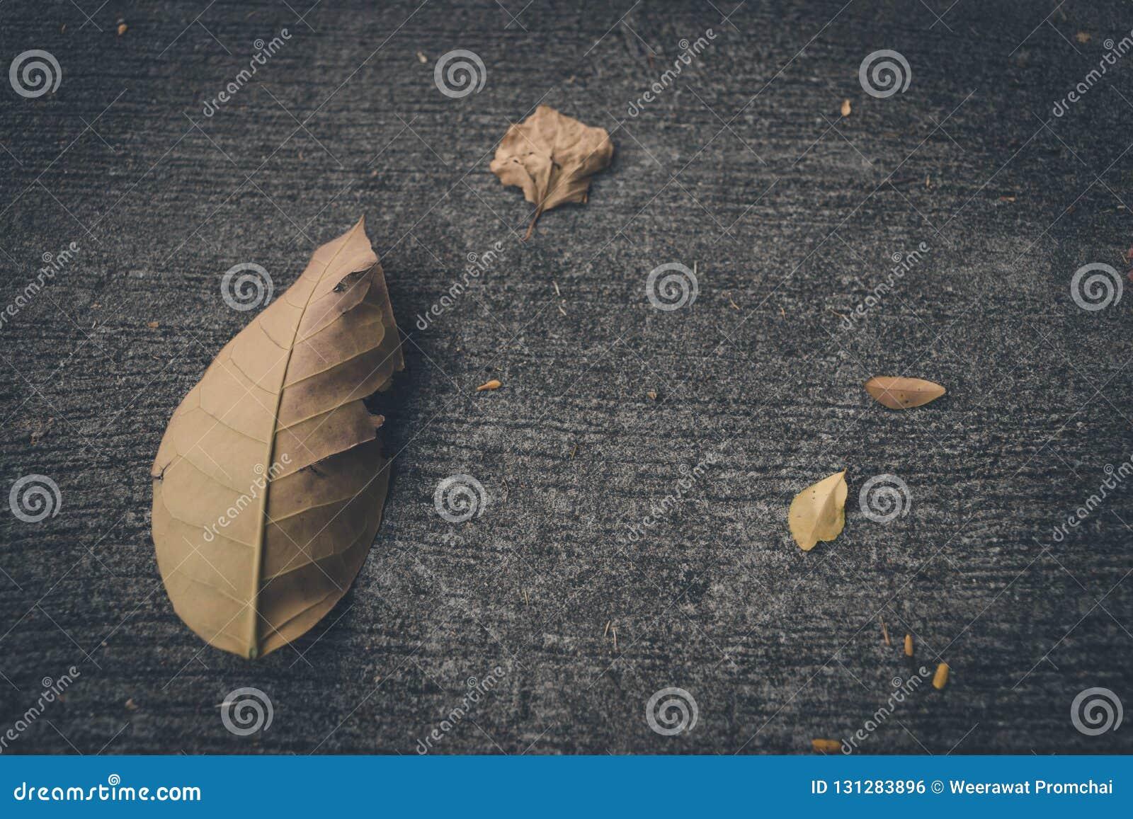 Torkat blad på konkret golv