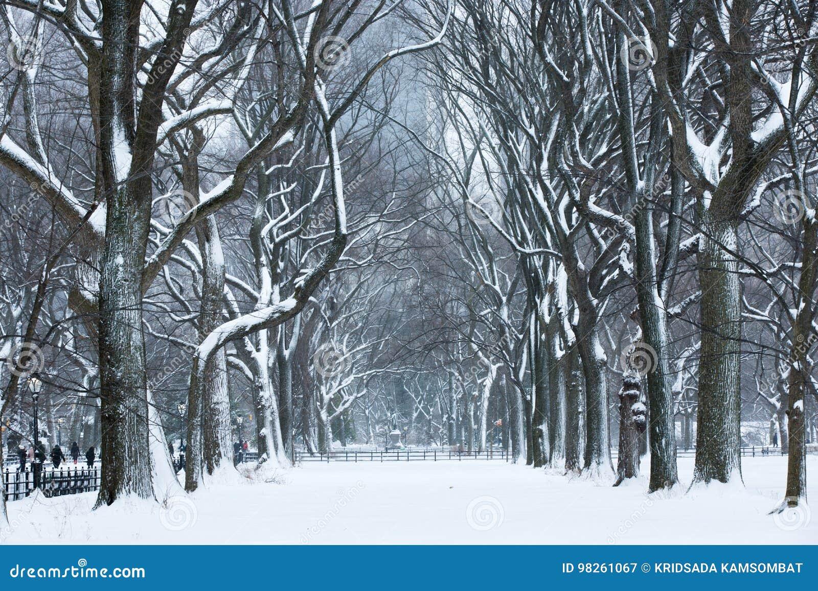 Tormenta de la nieve