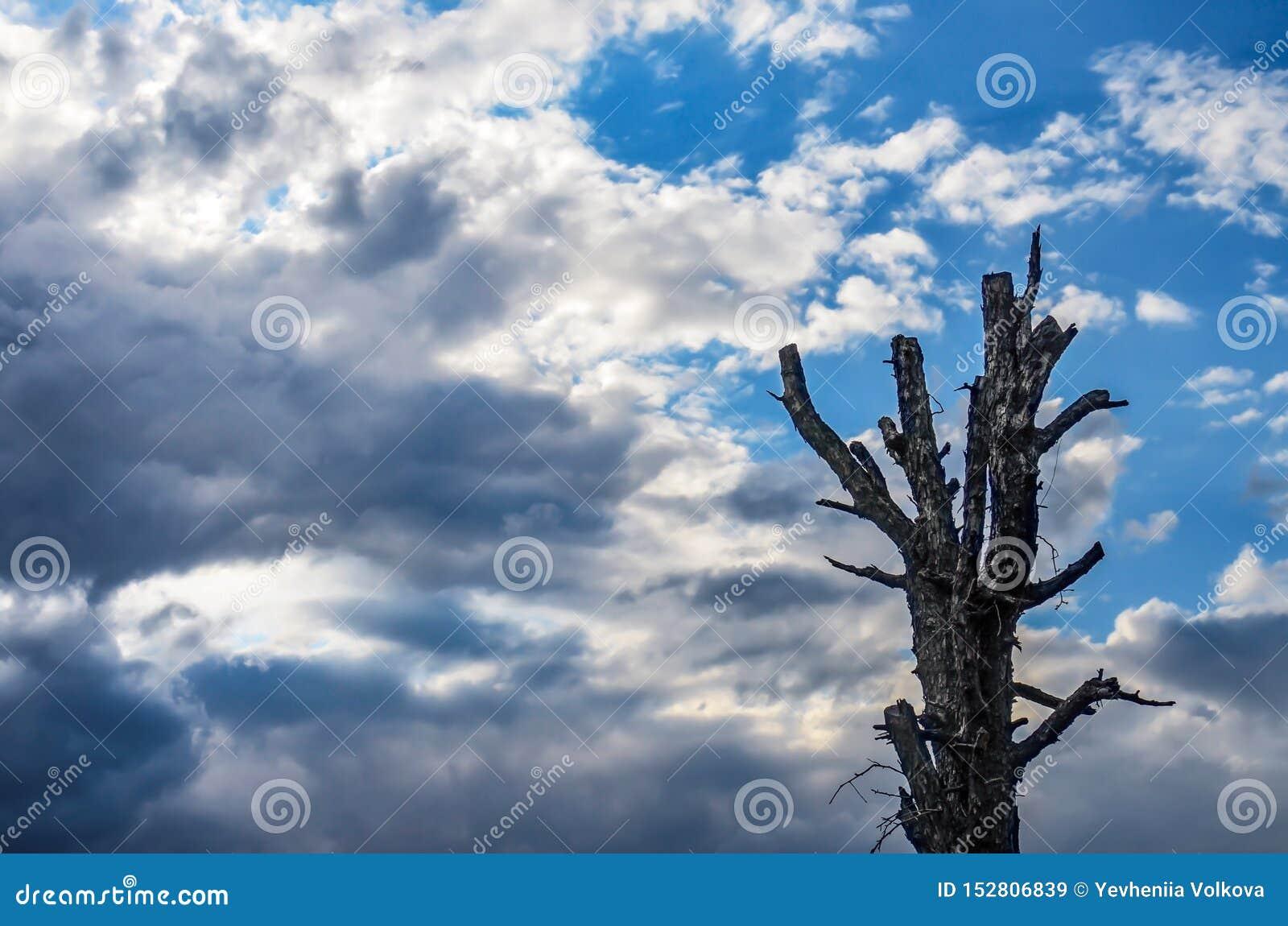 Tormenta inminente y cielo azul ?rbol muerto viejo