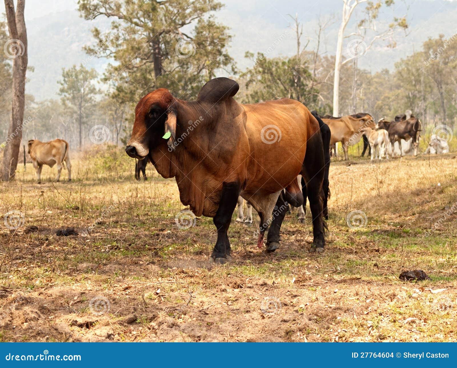 Big Dogs Red Deer