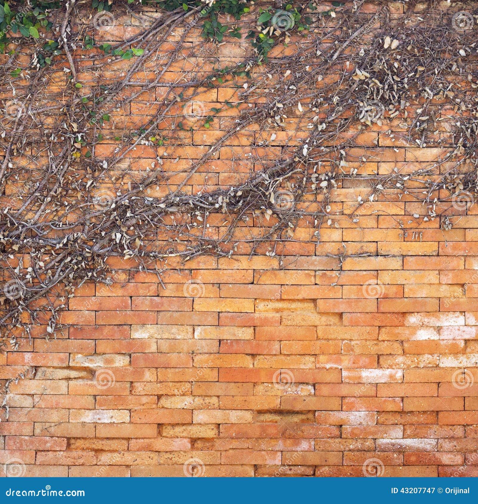 Download Torr murgrönavägg fotografering för bildbyråer. Bild av antikviteten - 43207747