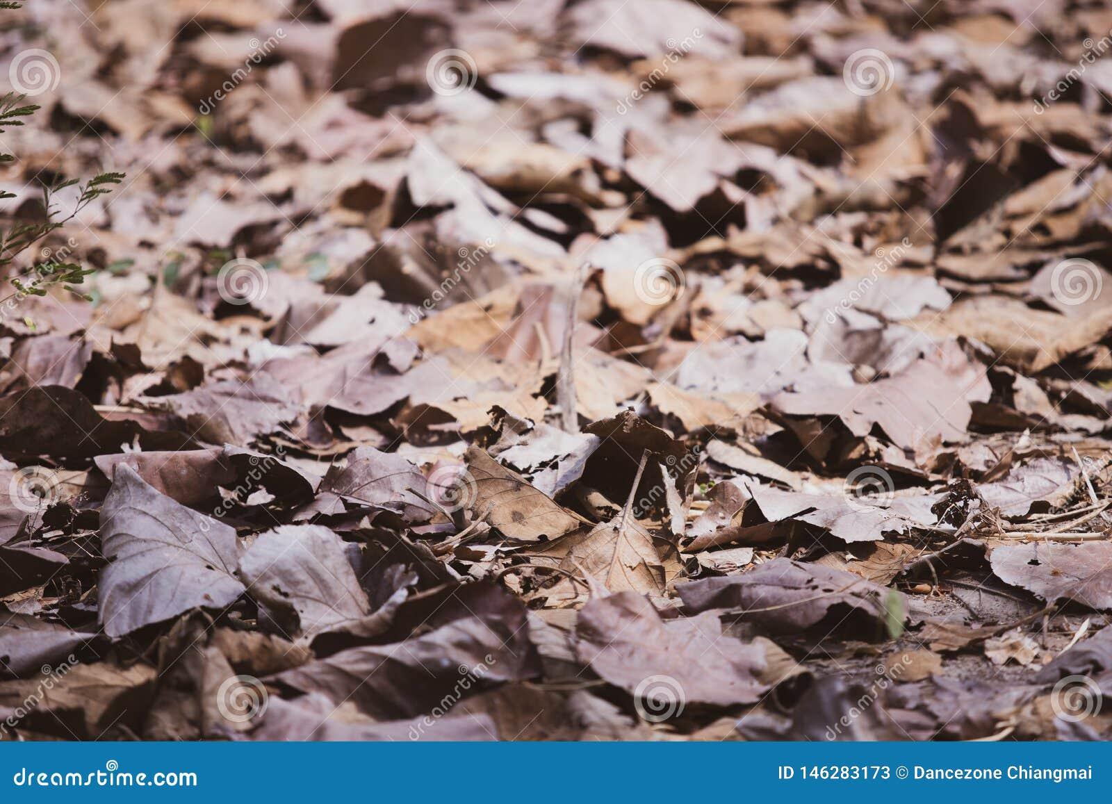Torra blad på jordningen