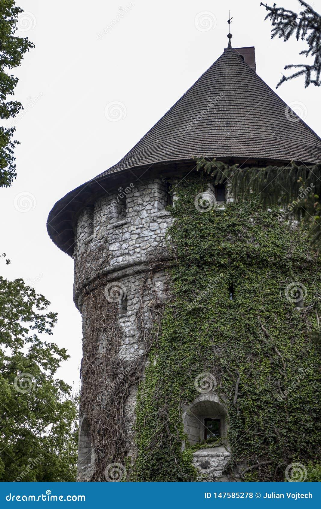Torre cónica del castillo demasiado grande para su edad con la hiedra verde