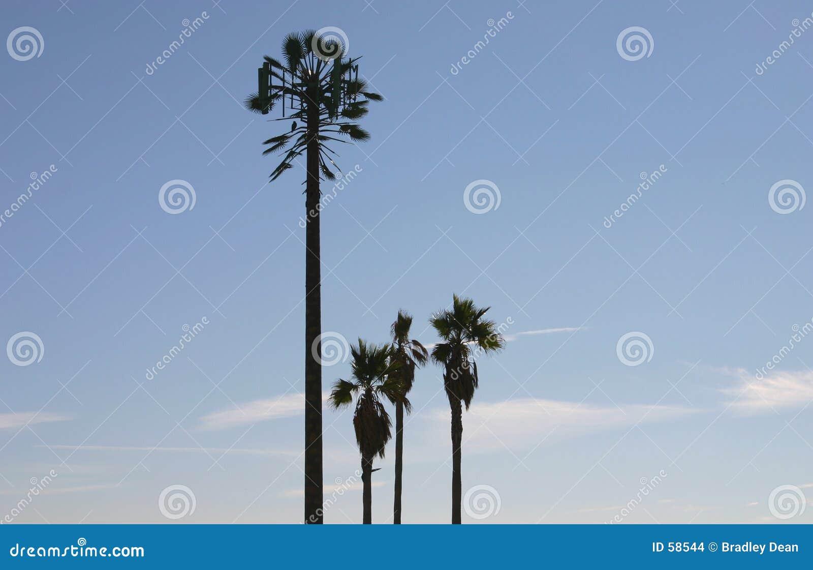Torre do telefone de pilha disfarçada como uma palmeira