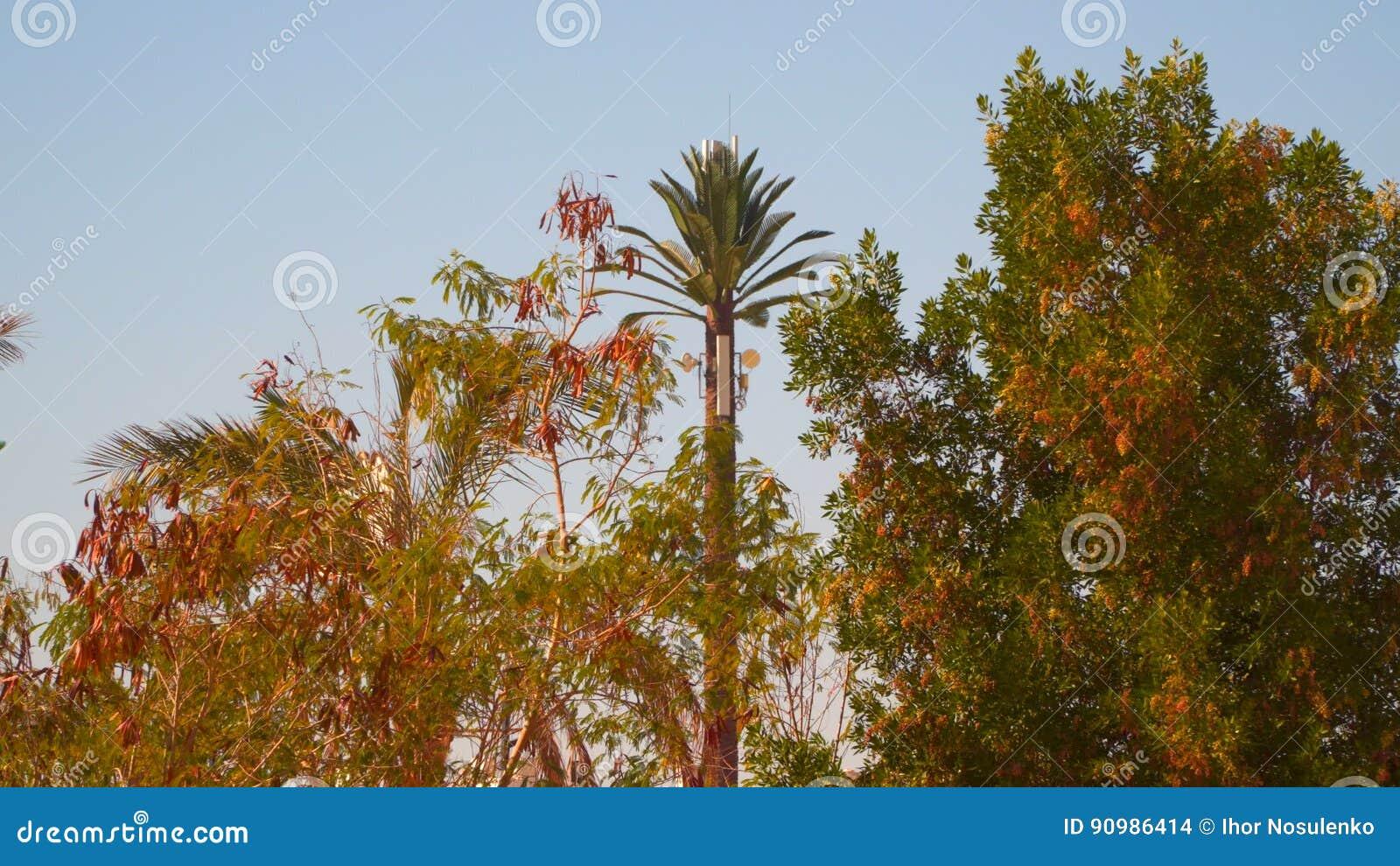 Torre do telefone sob a forma de uma palmeira vídeos de arquivo