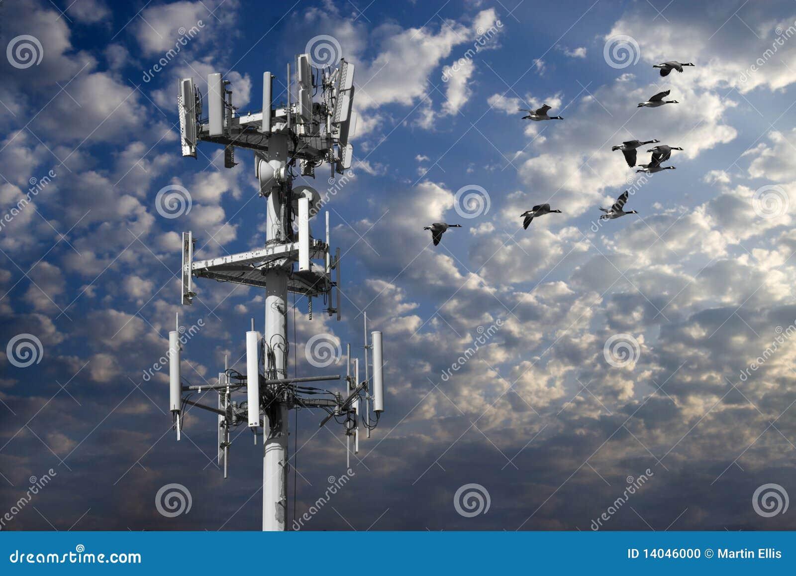 Torre e rebanho dos gansos