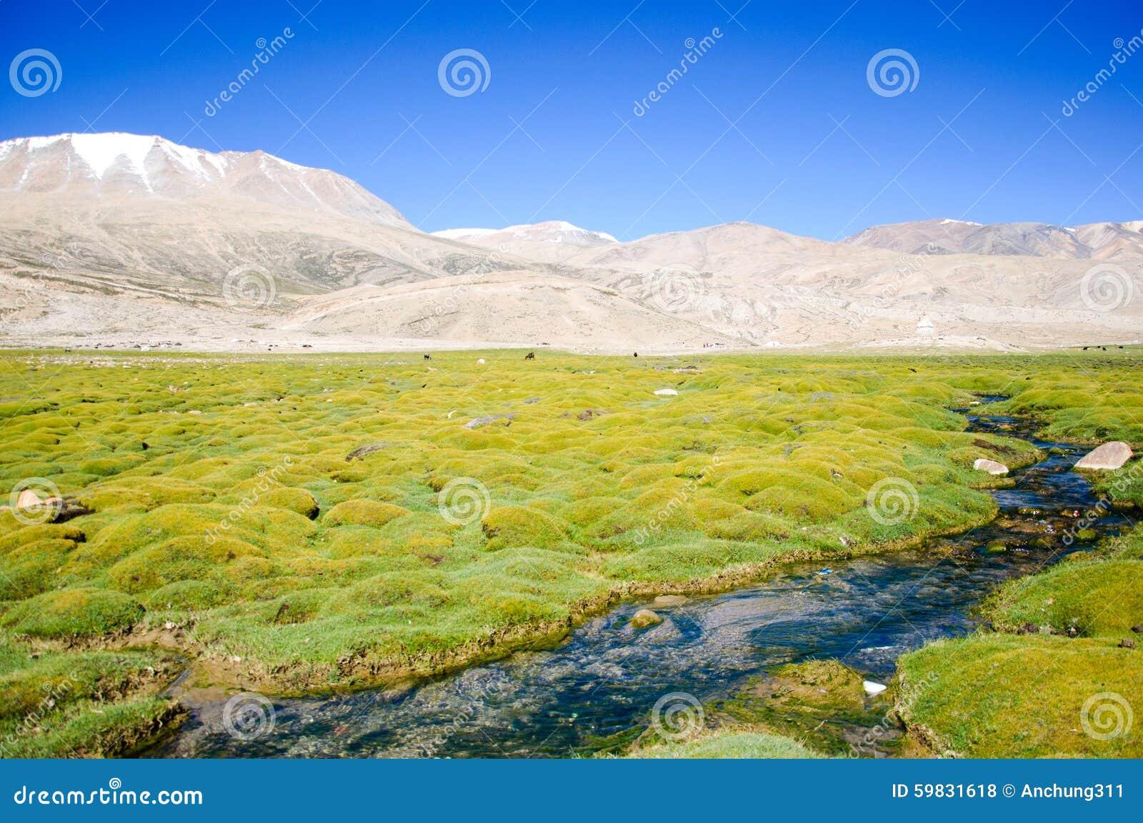 Torrente montano, Himalaya, Leh, Ladakh, India