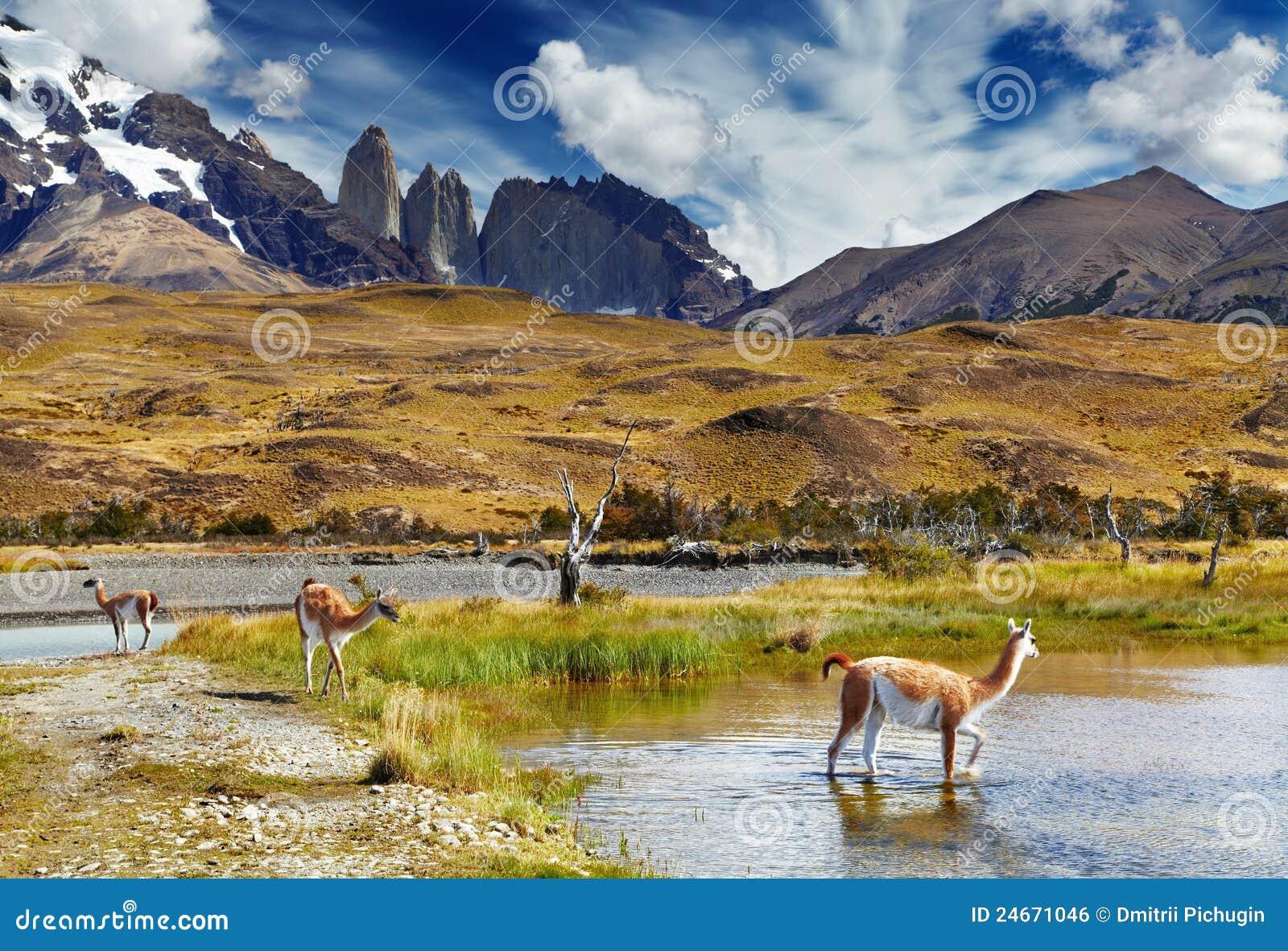 Torres del Paine, Patagonia, Cile
