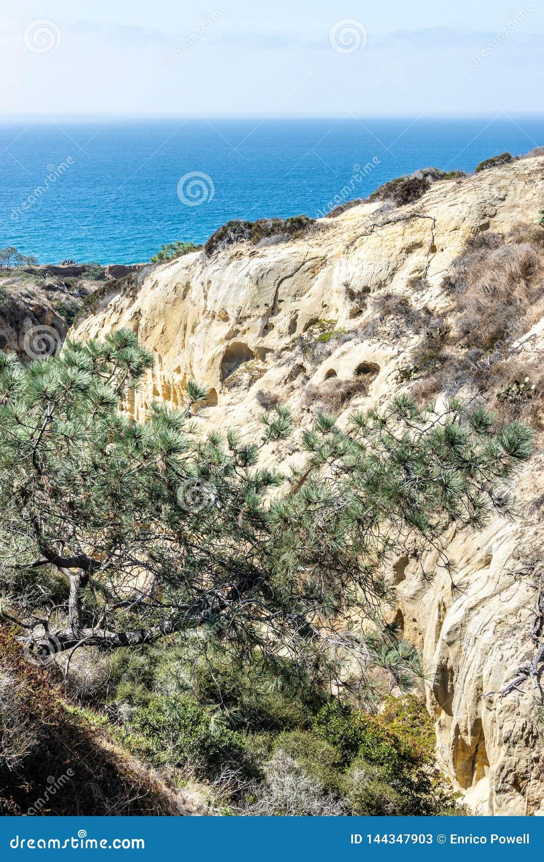 Torrey Pines State Reserve e praia em San Diego, Califórnia