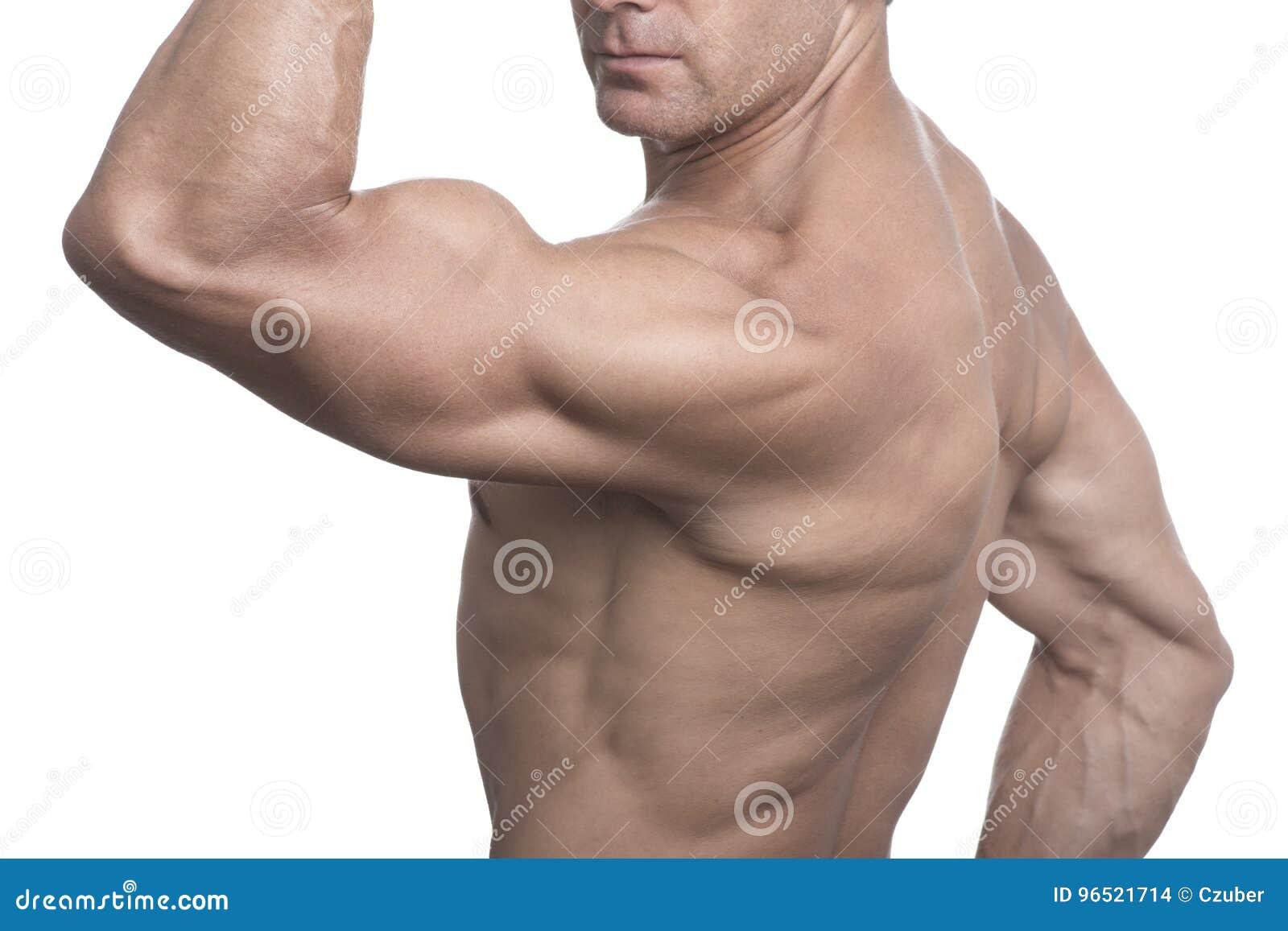 Torse d homme musculaire posant sur le fond blanc