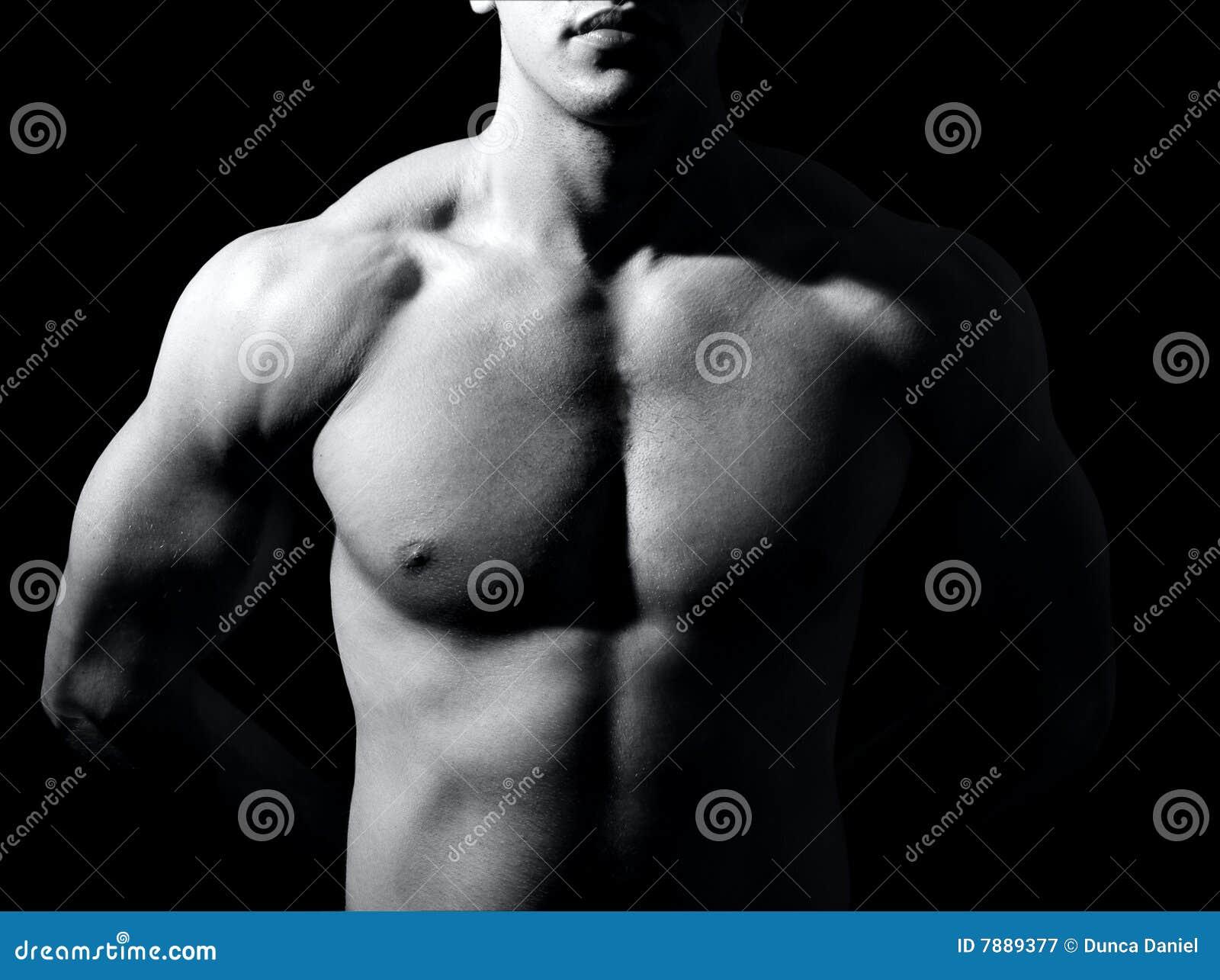 Torse mâle musculaire