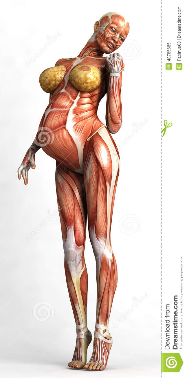 Torso Of Pregnant Woman Stock Illustration Illustration Of Muscles