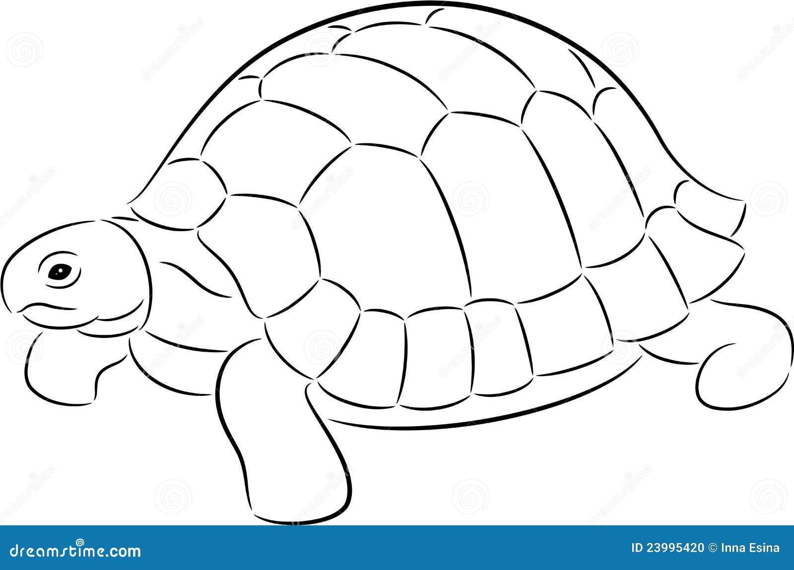 Tortoise Stock Photo Image 23995420