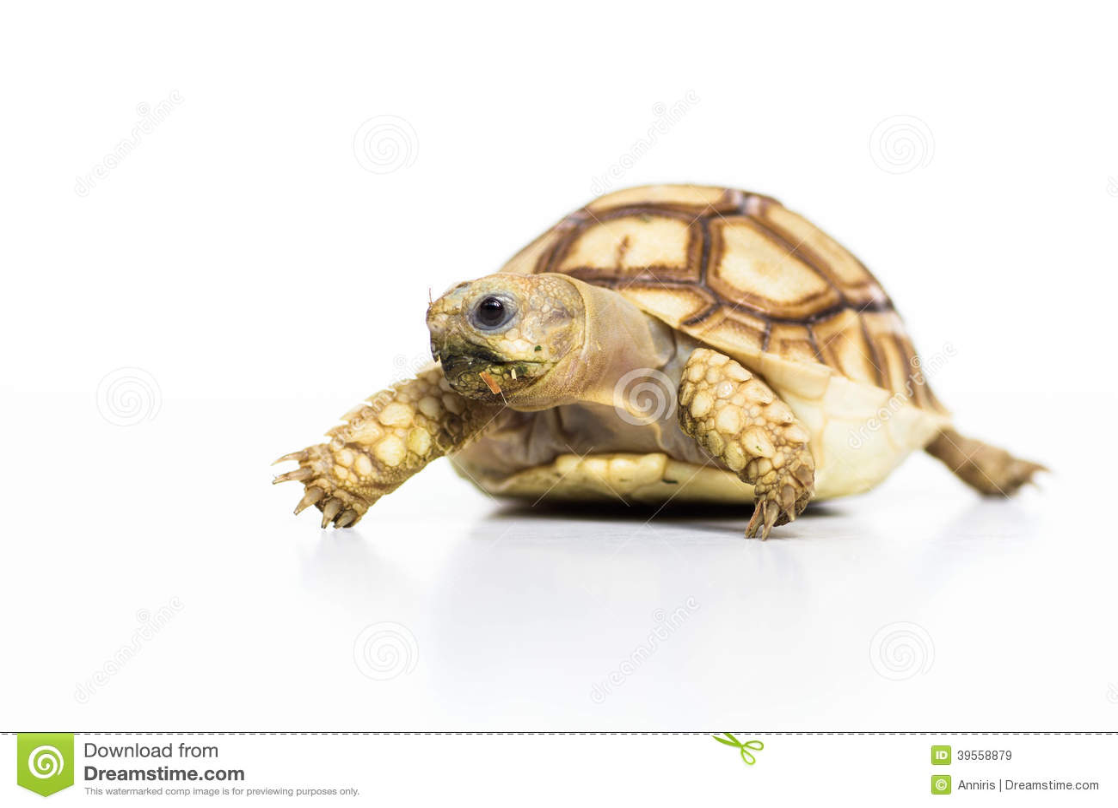 Tortoise Pet Turtle Stock Photo - Image: 39558879