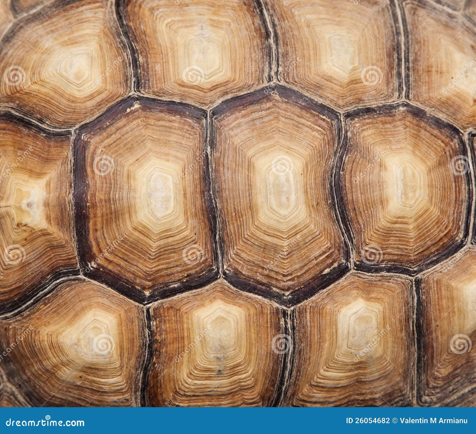 turtle shell pattern - 800×683
