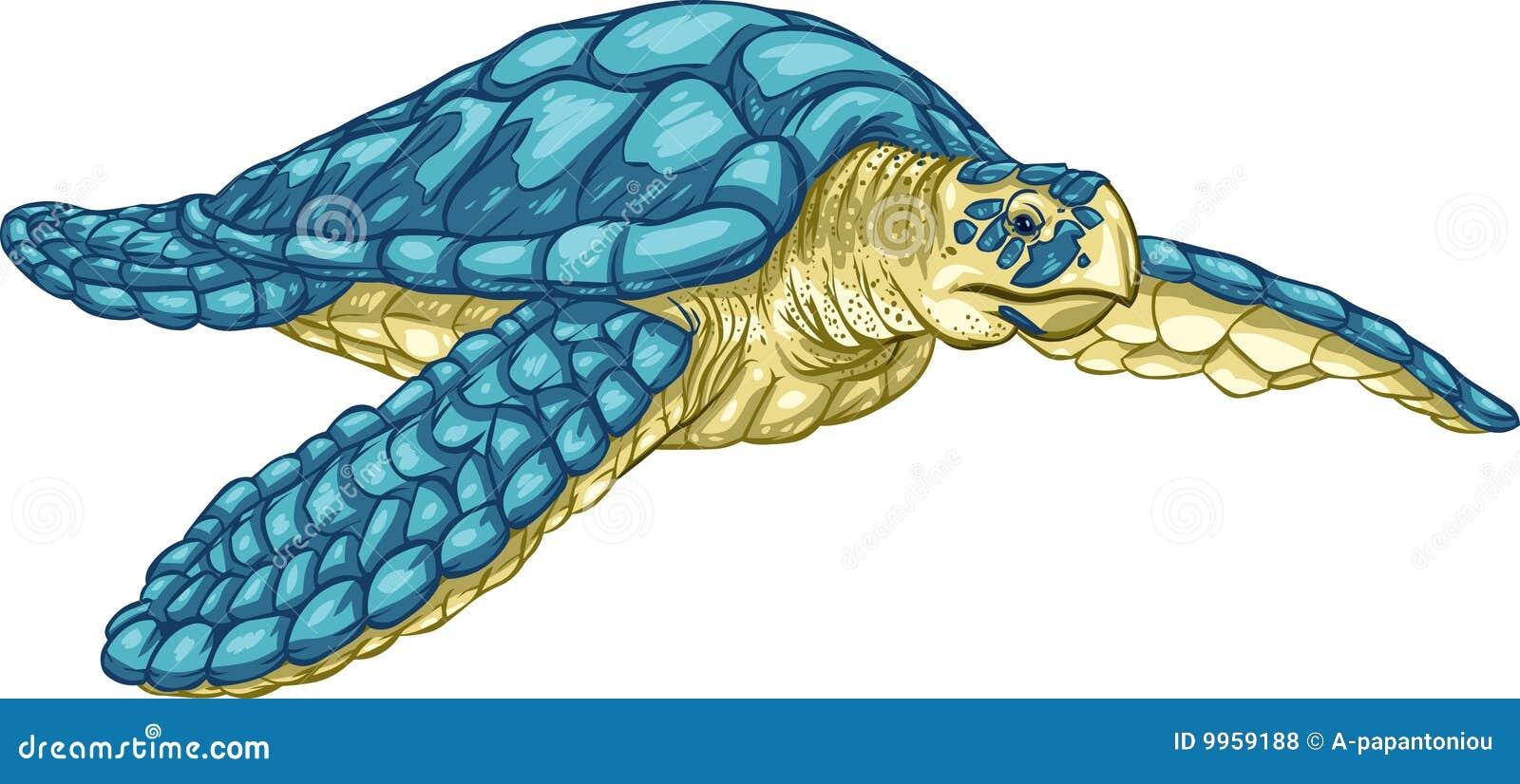 Tortue de mer de hawksbill