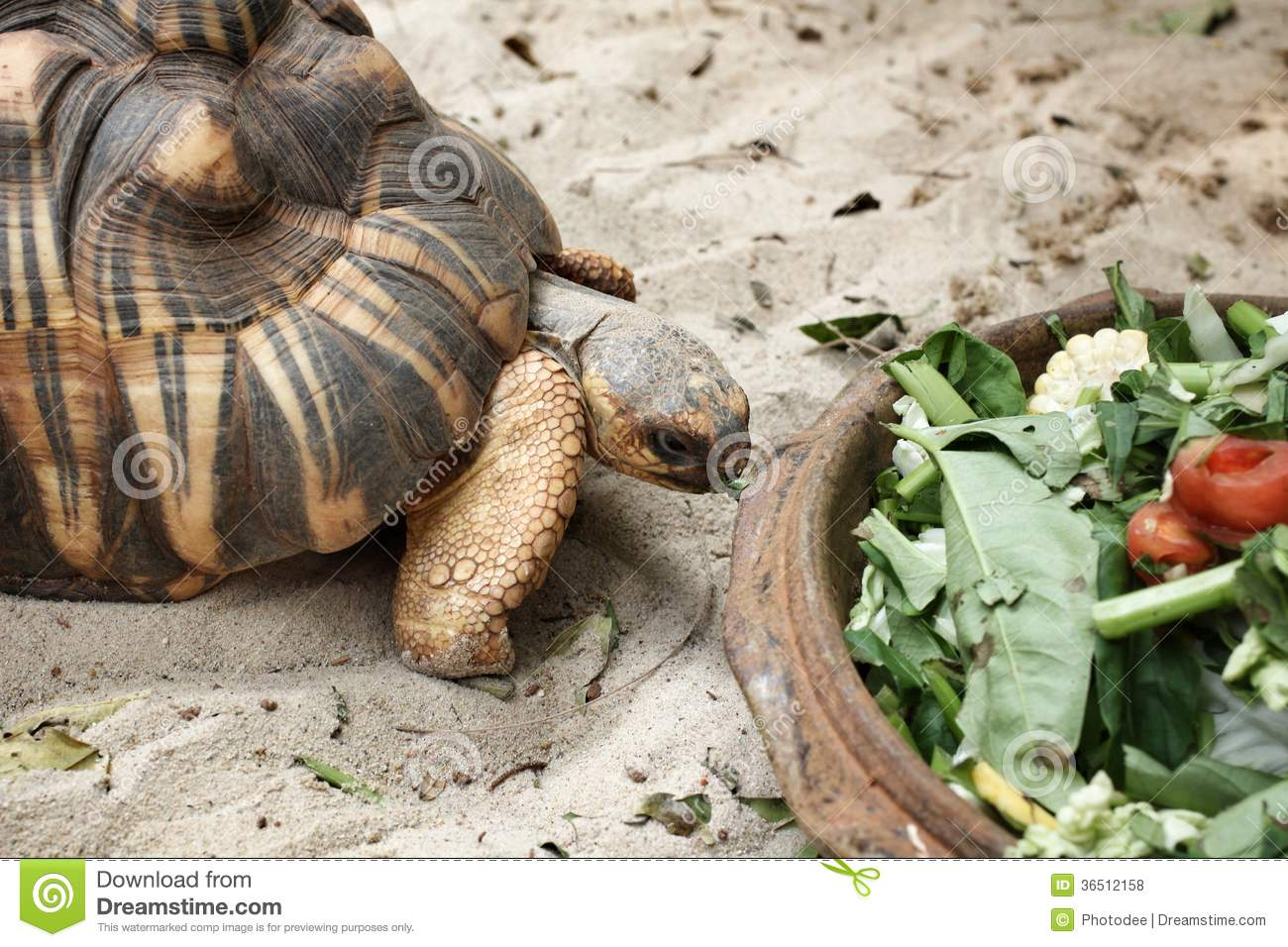 Tortue de rampement