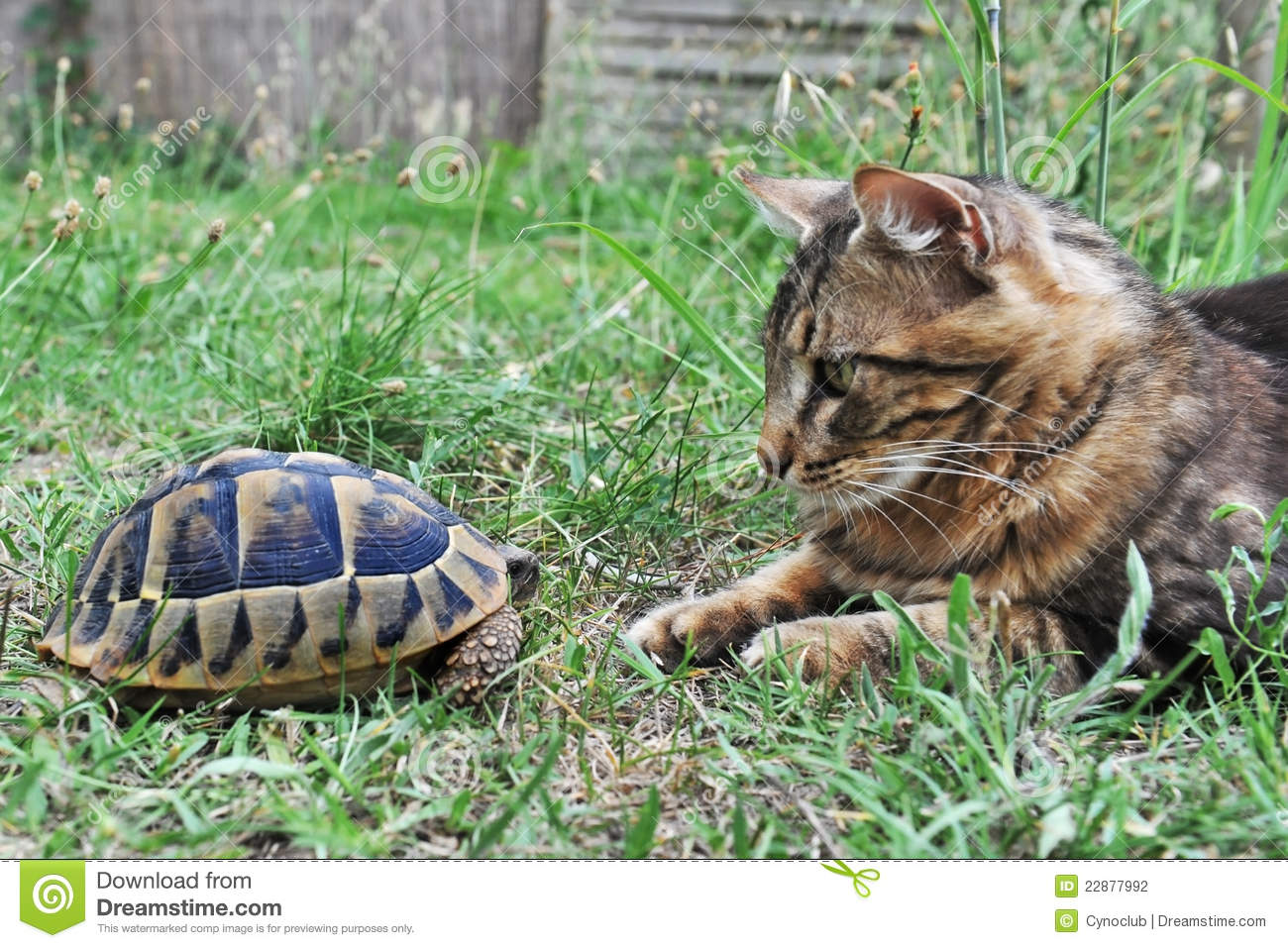 tortue et chat photographie stock image 22877992