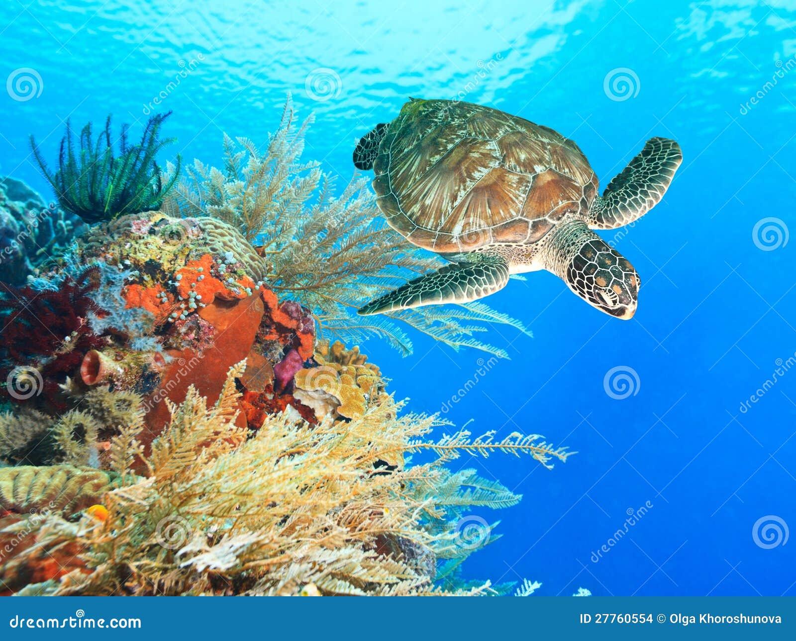 Tortue et corail