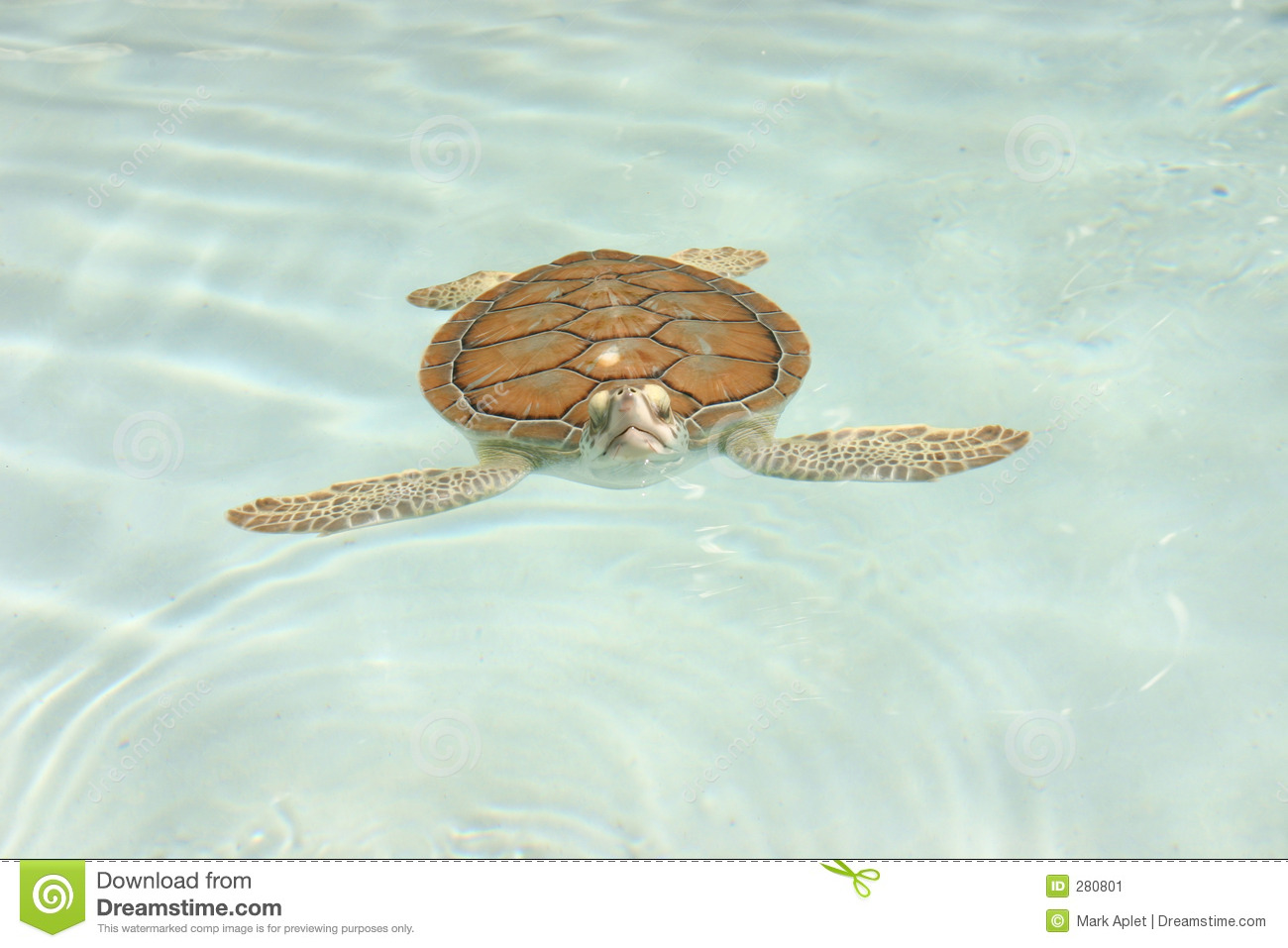 Tortuga Chica