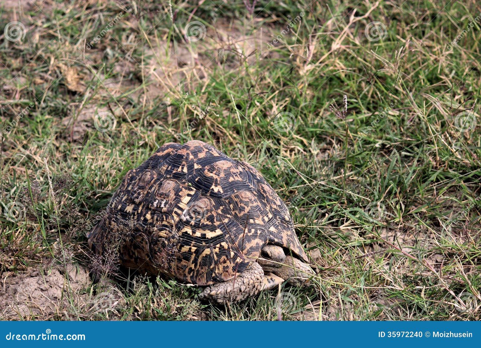 Tortuga en el parque nacional de Tanzania