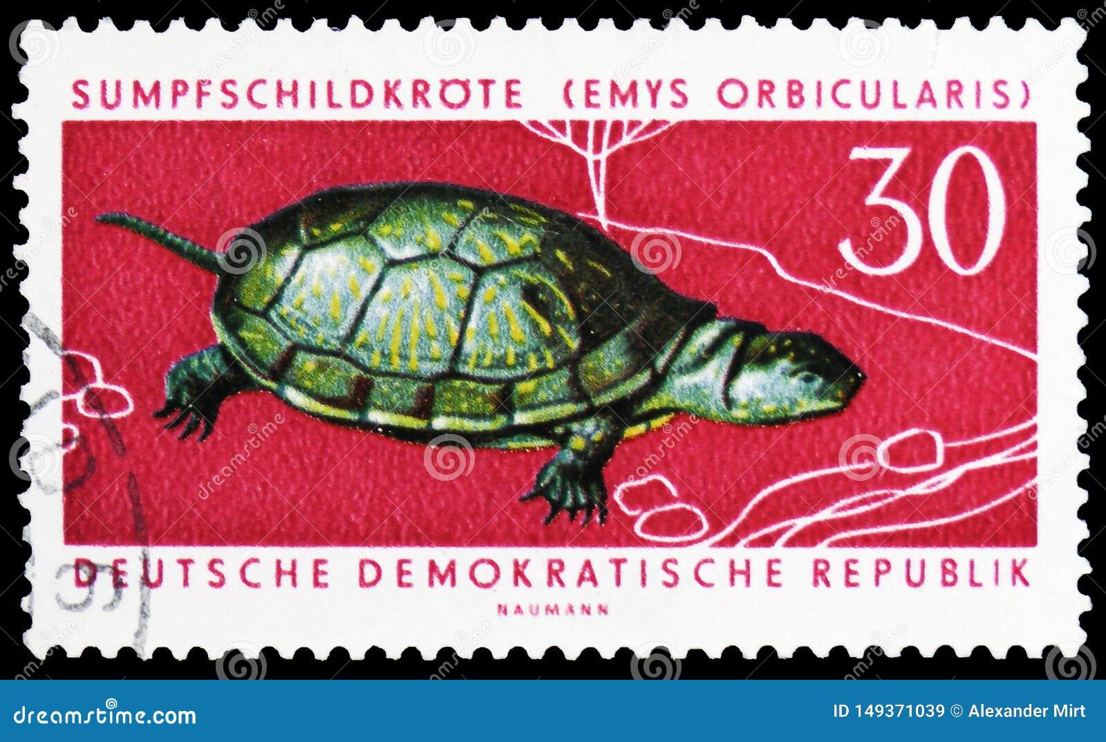 Tortuga europea de la charca (orbicularis) de Emys, serie protegido de los animales, circa 1963