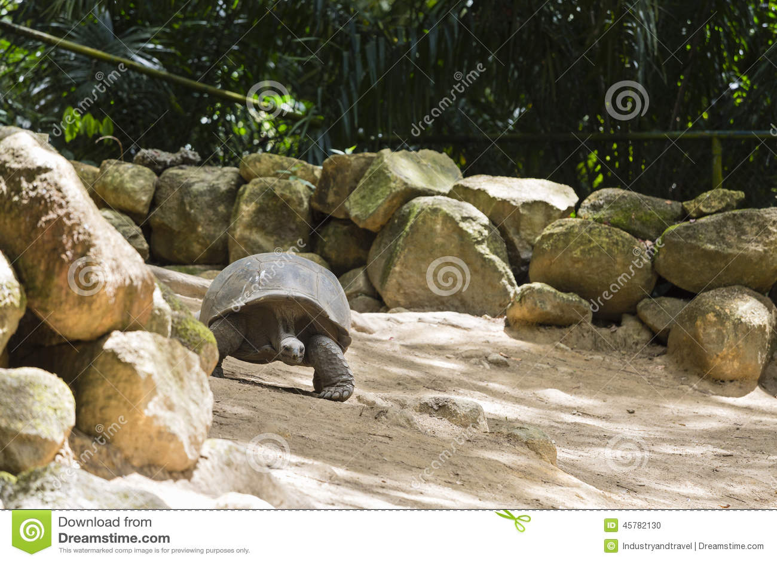 Tortuga gigante mahe seychelles foto de archivo imagen for Villa de jardin mahe seychelles
