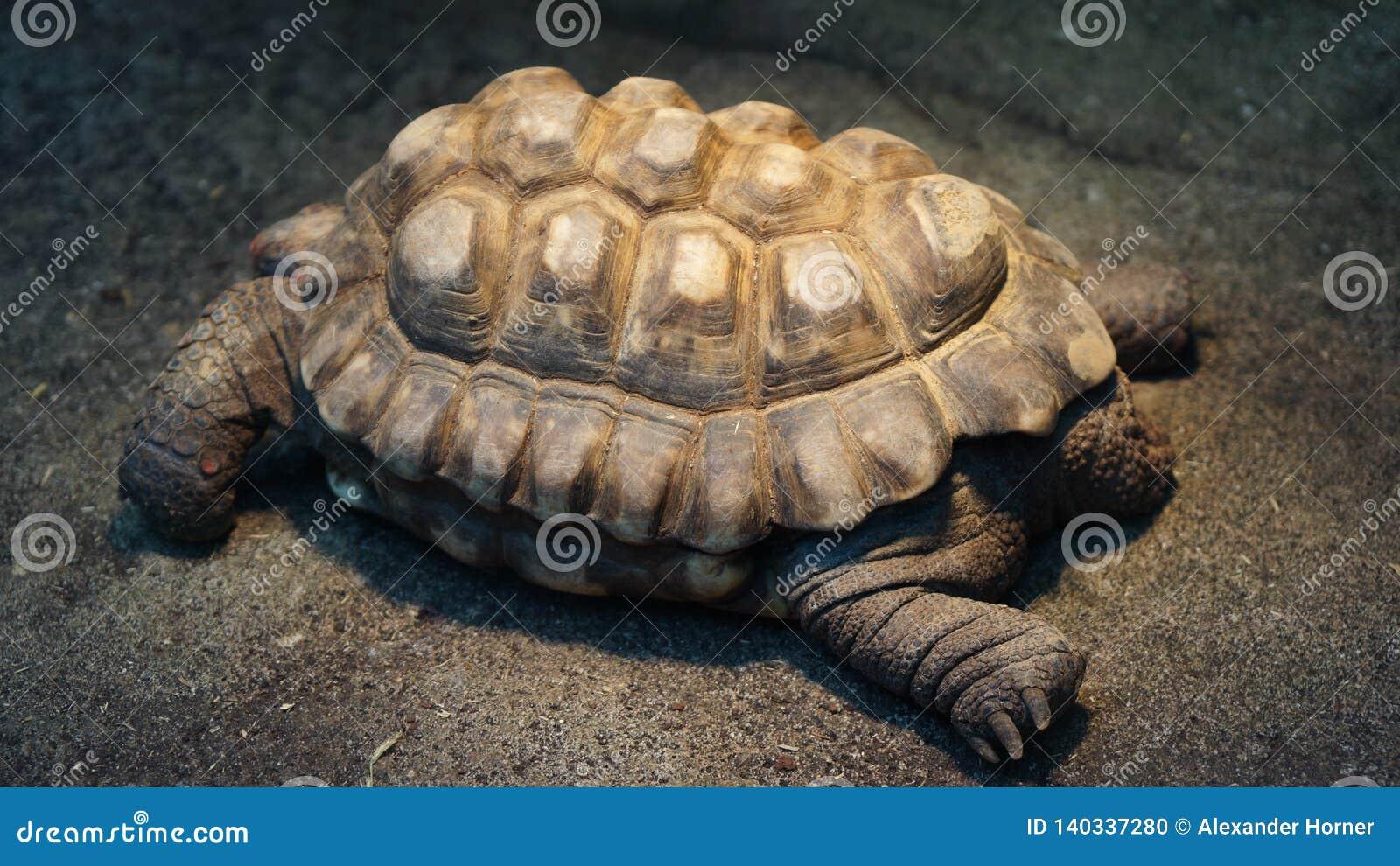 Tortuga gigante que se sienta en sol
