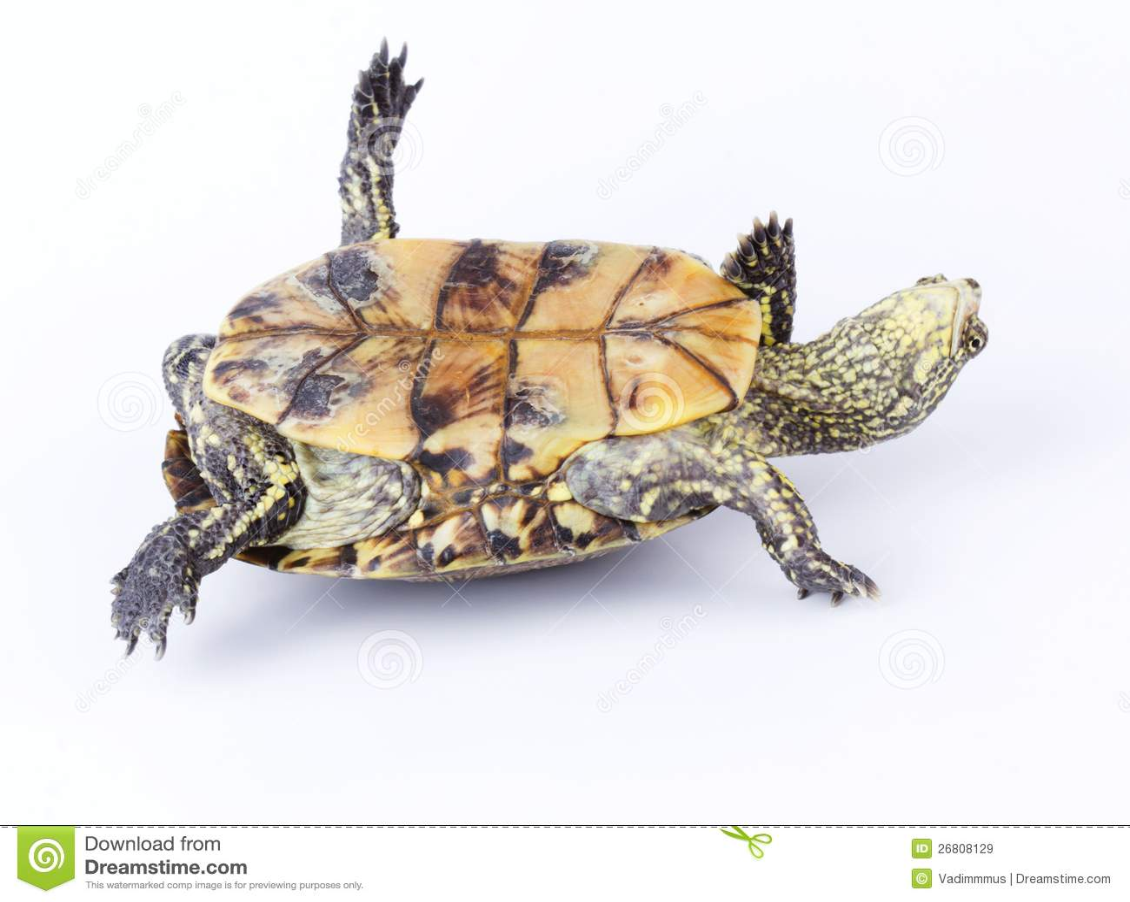Tortuga upside-down