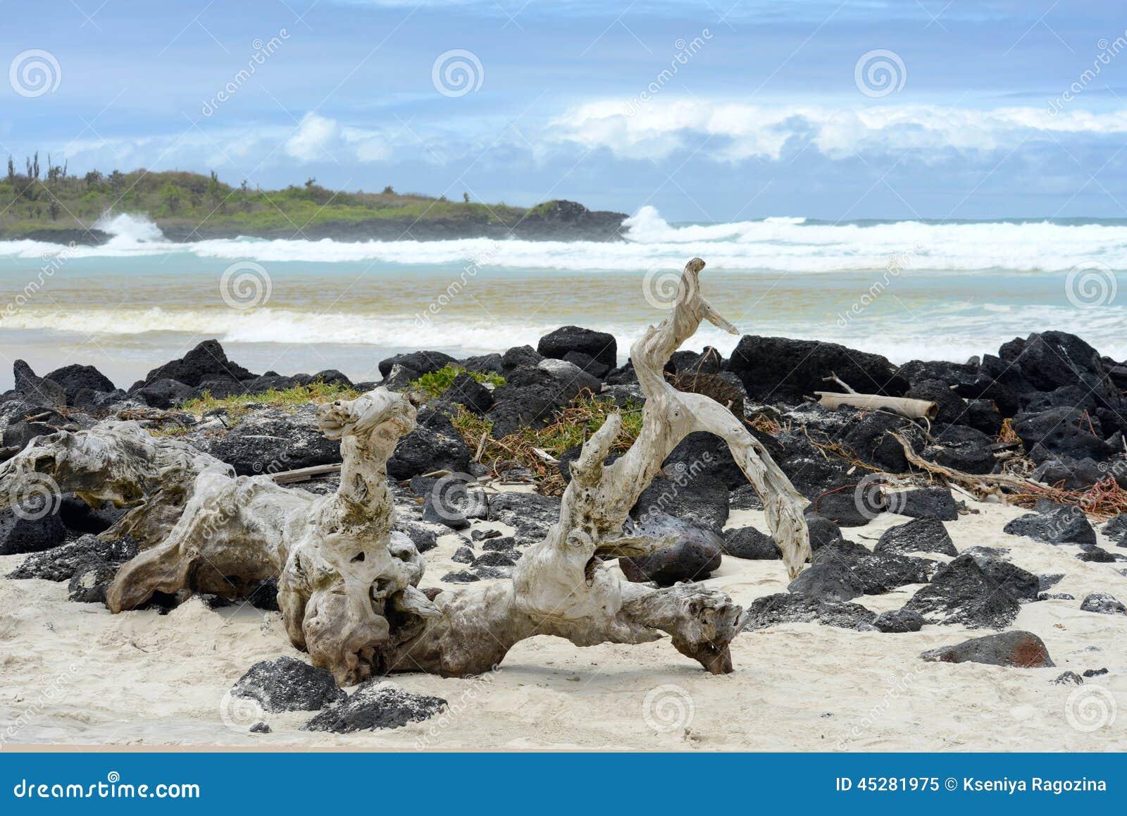 Tortugabaai, Santa Cruz, de Galapagos