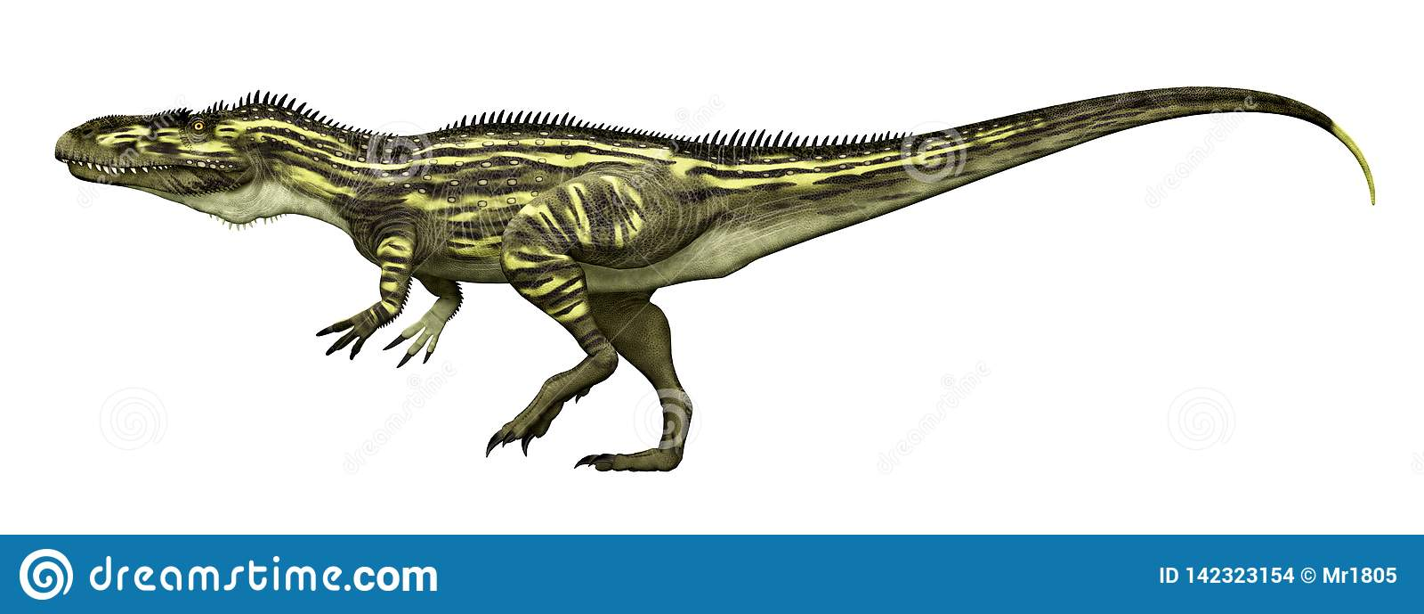 Torvosaurus do dinossauro isolado no fundo branco