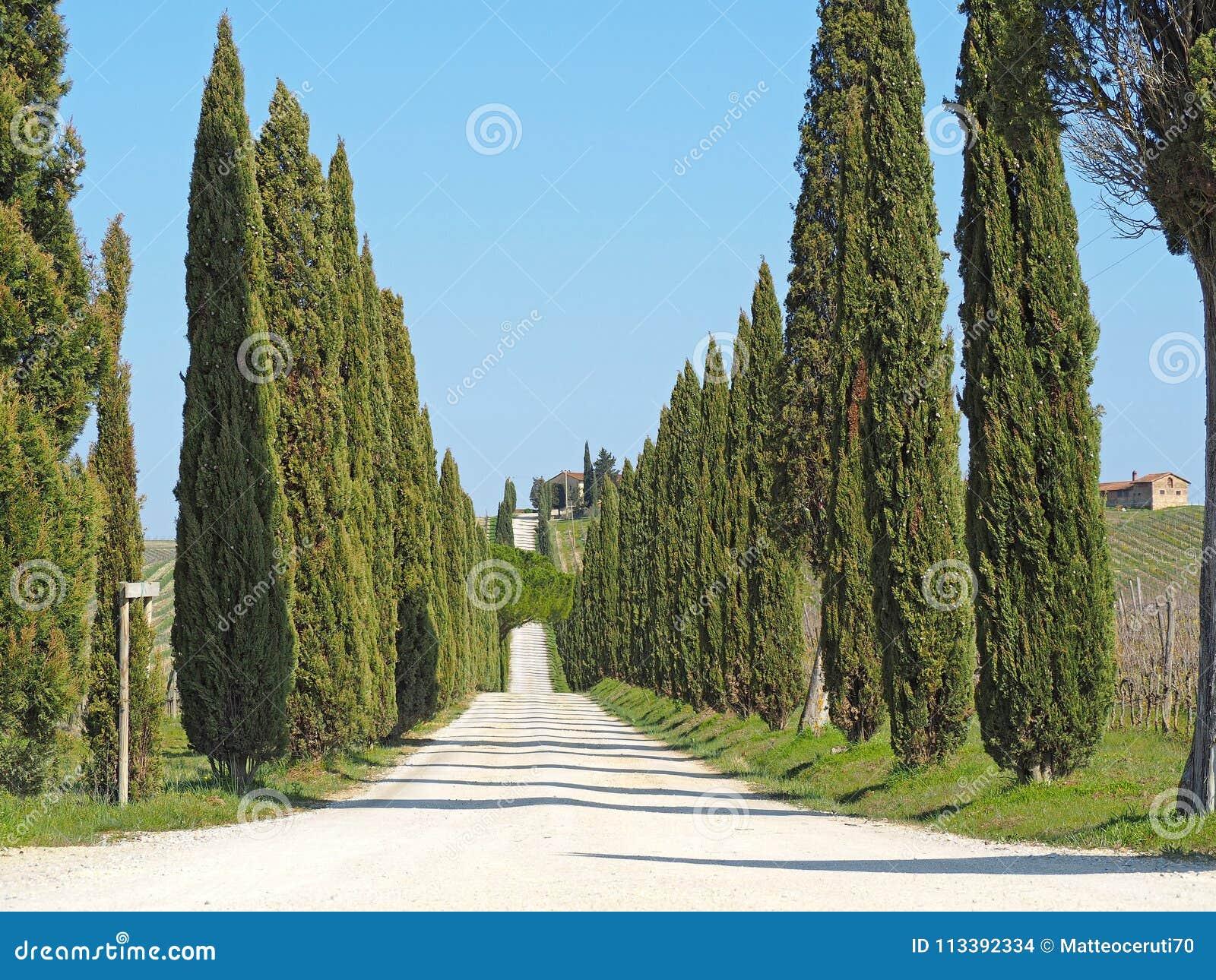 Toscana, paisaje de una avenida del ciprés cerca de los viñedos