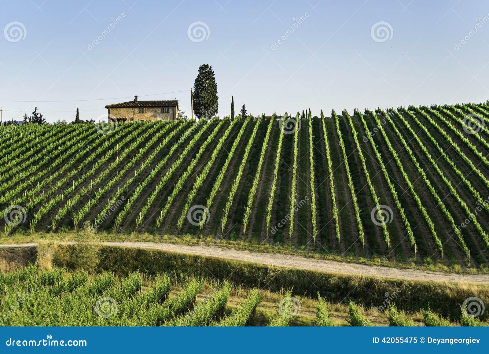 Toskania winnice