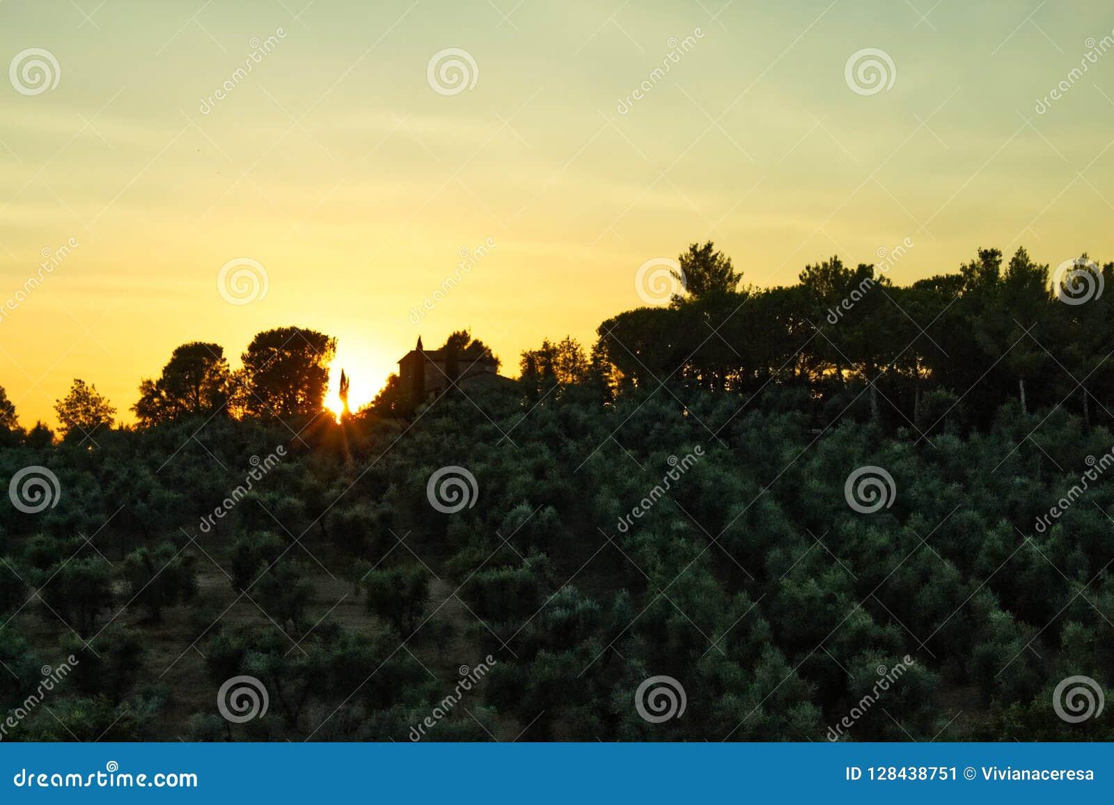 Toskanischer Sonnenuntergang auf Olive wachsen