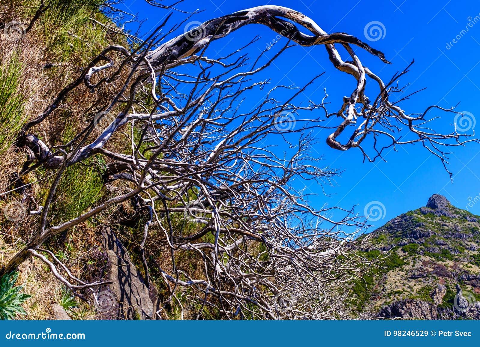 Tote Bäume hoch in den Bergen