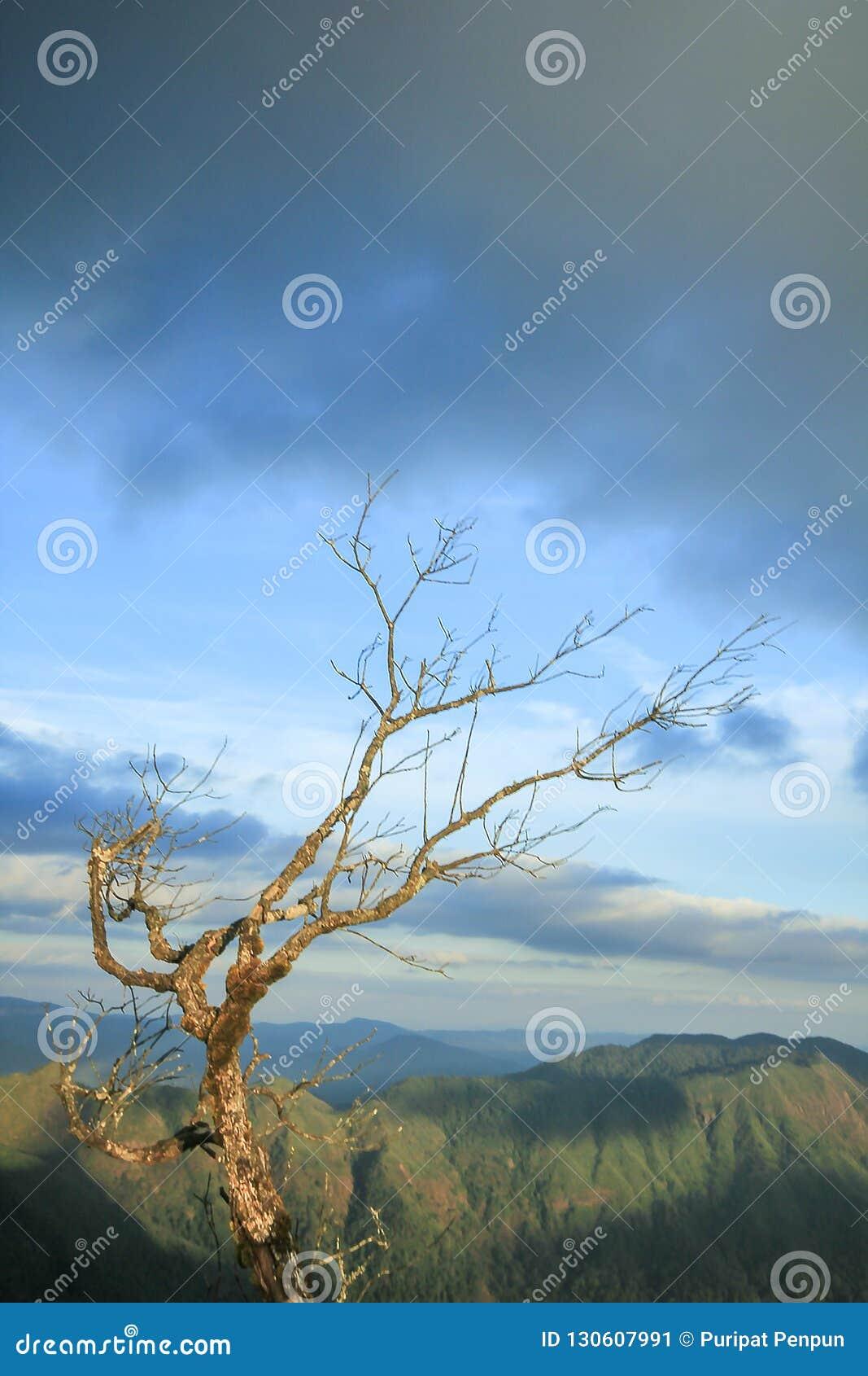 Tote Bäume mit Bergblicken