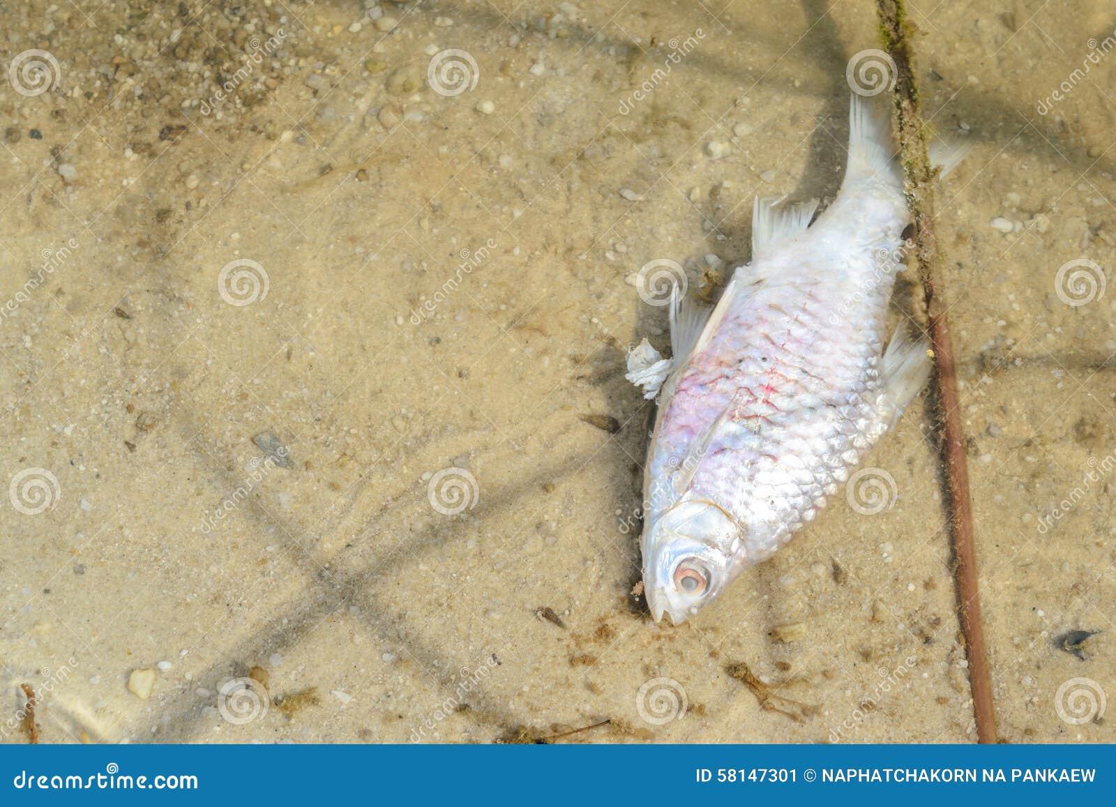 Tote fische im teich stockfoto bild 58147301 for Fische in teich