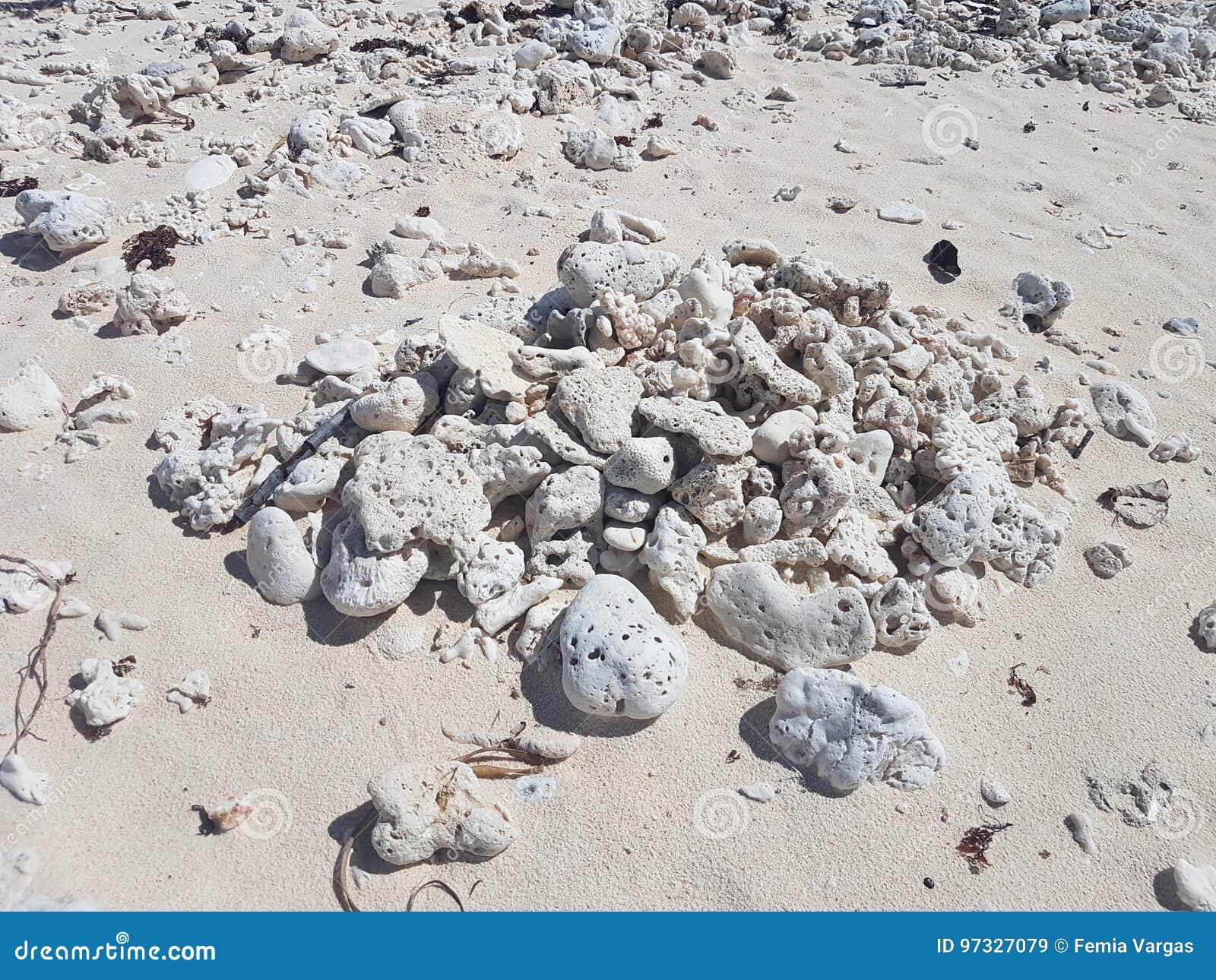 Tote Korallen