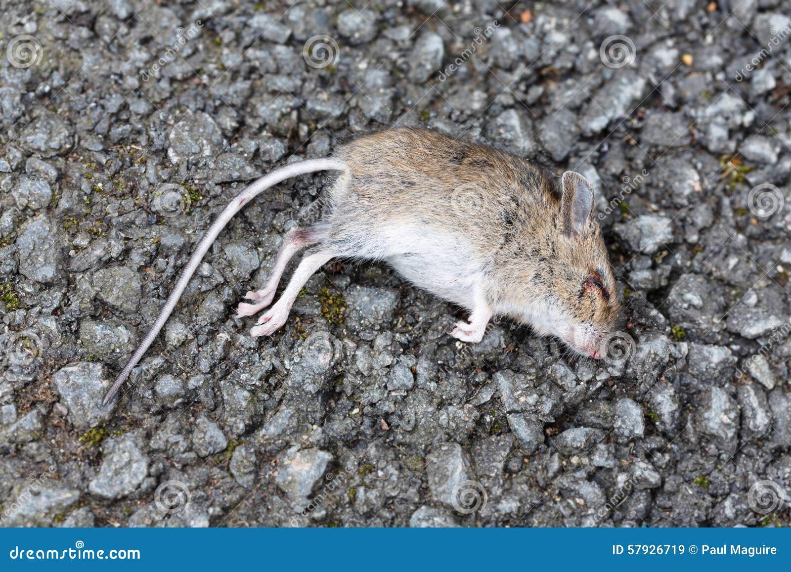 Tote Maus