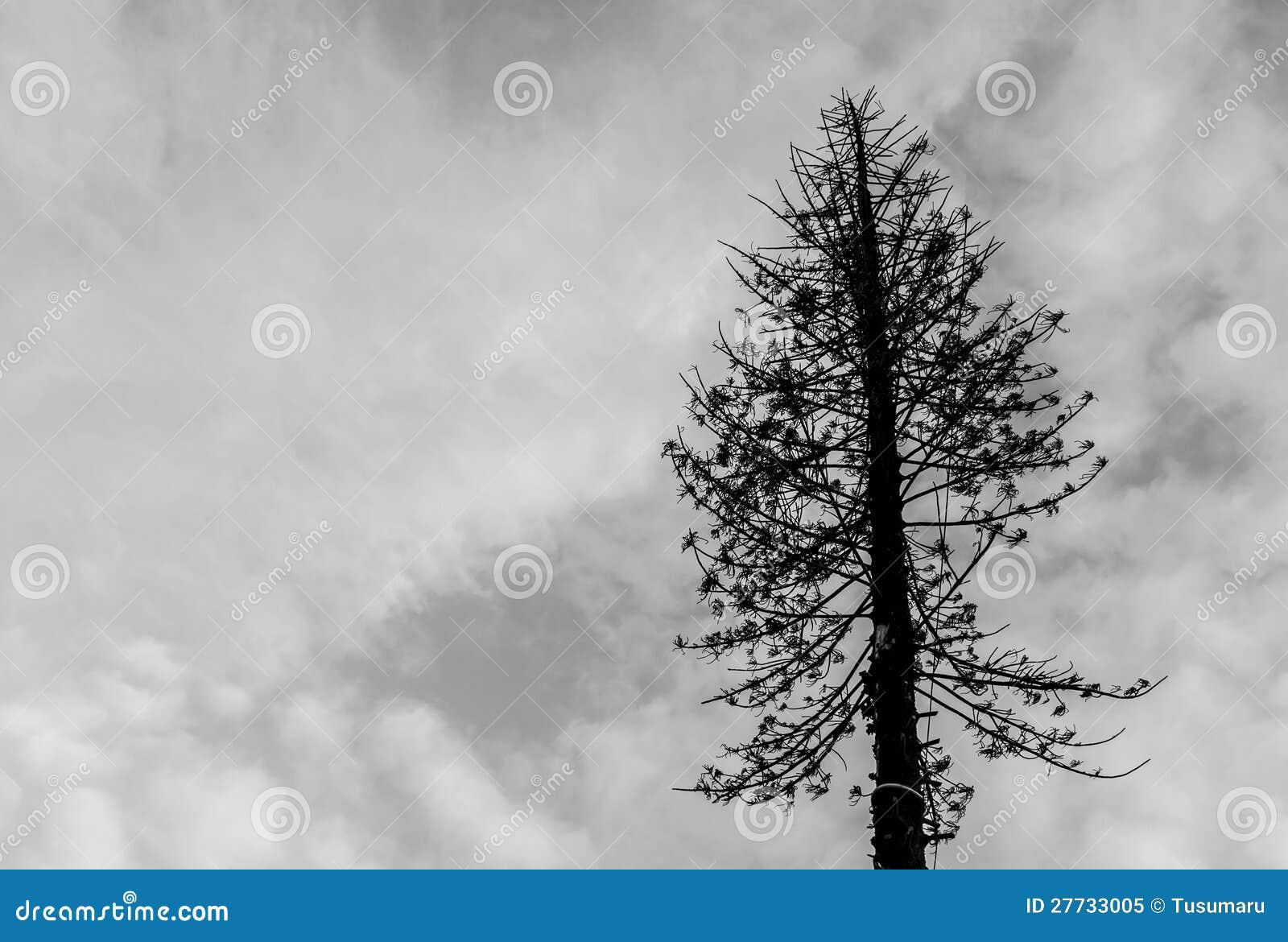Toter Baum.