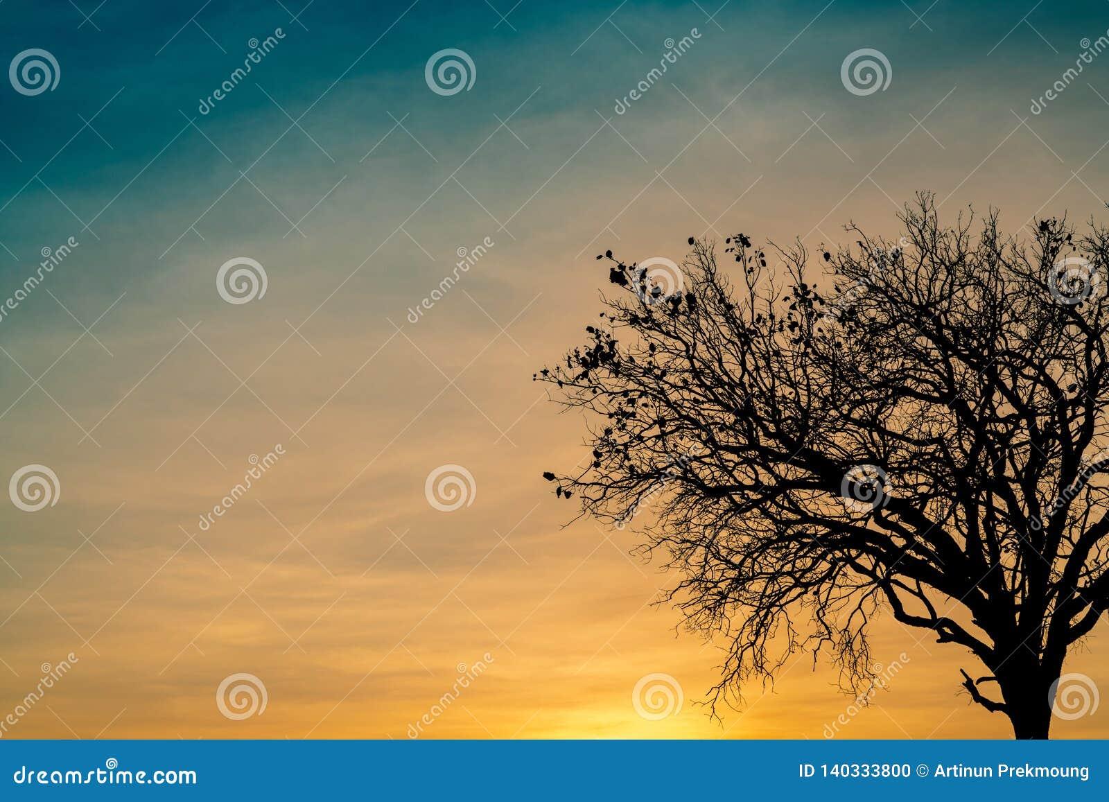 Toter Baum des Schattenbildes auf schönem Sonnenuntergang oder Sonnenaufgang auf goldenem Himmel Hintergrund für ruhiges und ruhi