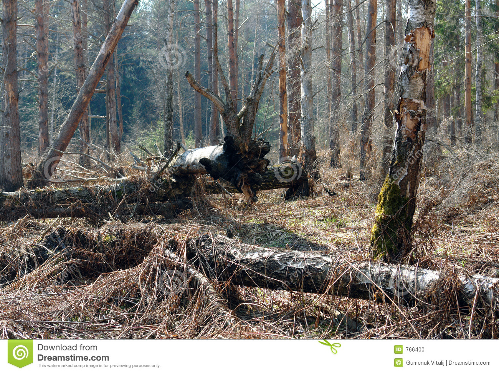 Totes Holz.