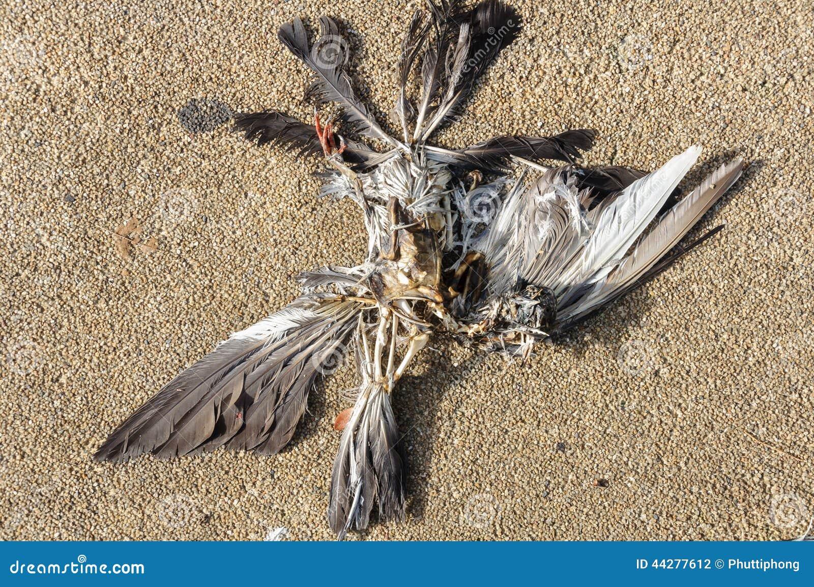 Totes Vogel-Skelett Stockfoto - Bild: 44277612