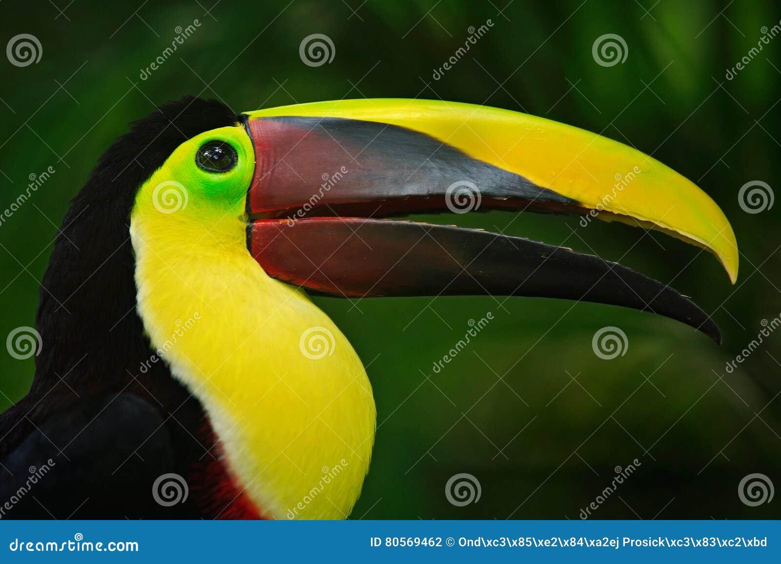 Το μεγάλο μου πουλί