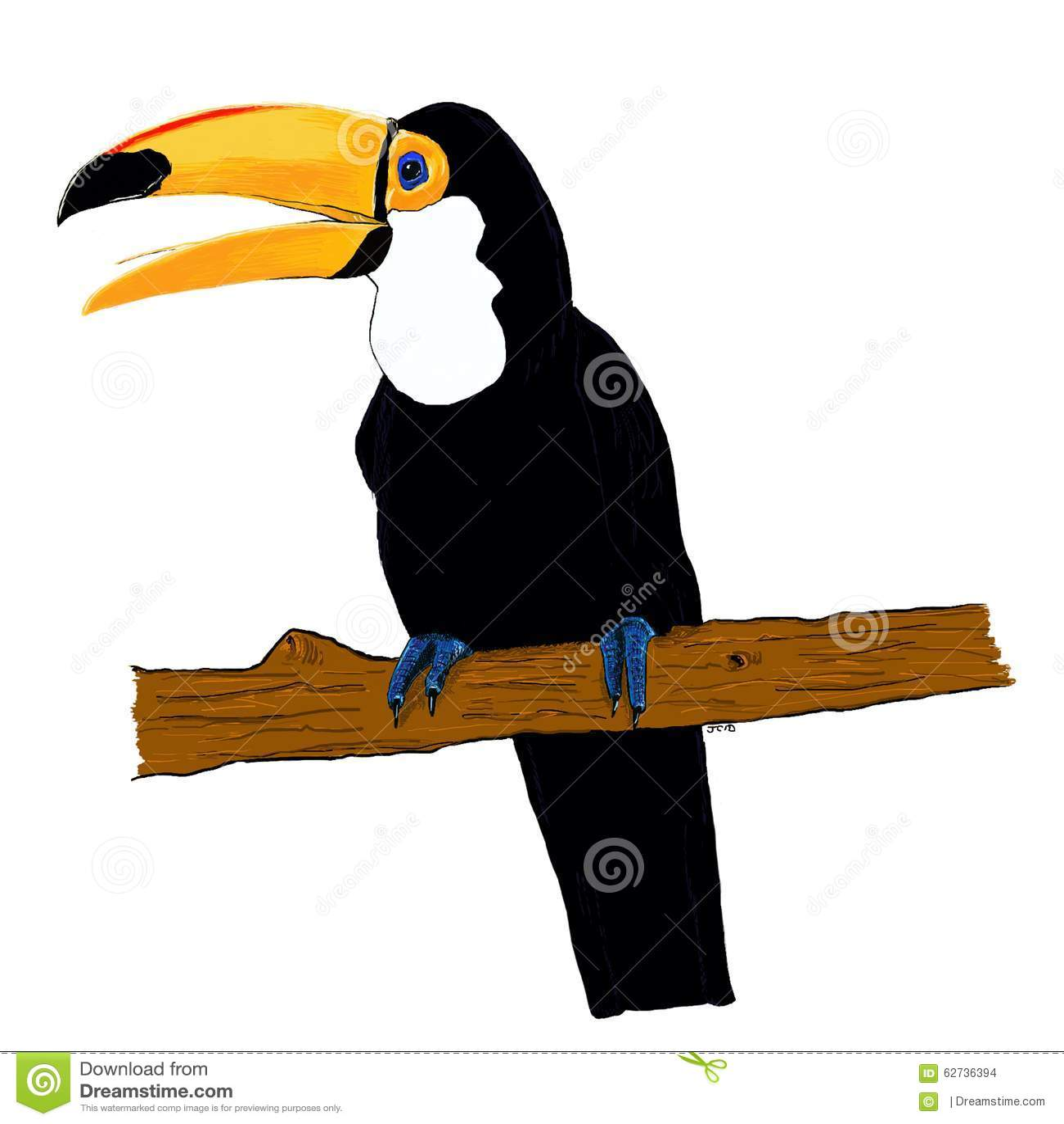 Toucan Bird Drawing Toucan Stock Illustrat...