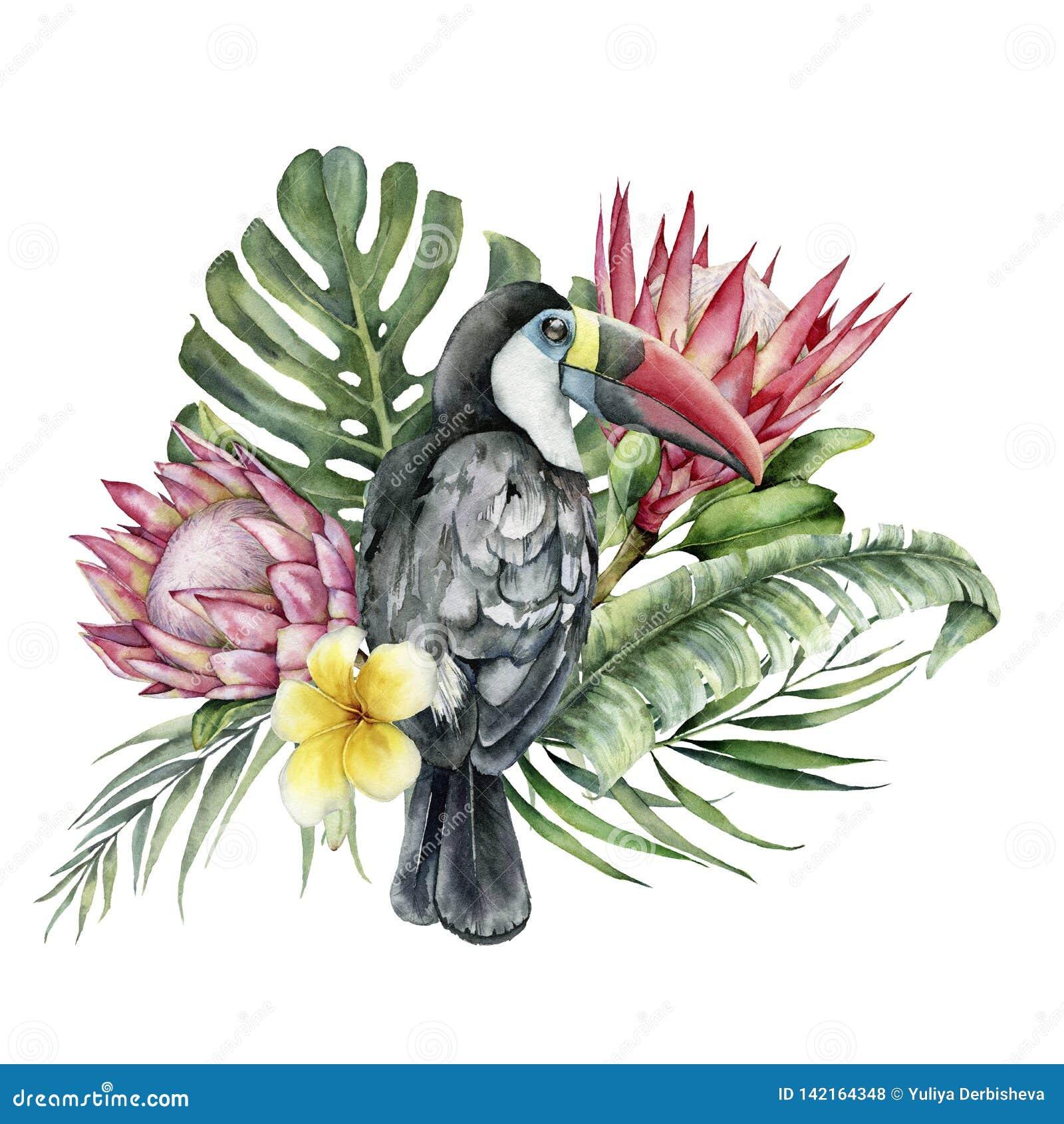 Toucan d aquarelle et bouquet tropicaux de fleurs Oiseau, protea et plumeria peints à la main d isolement sur le fond blanc