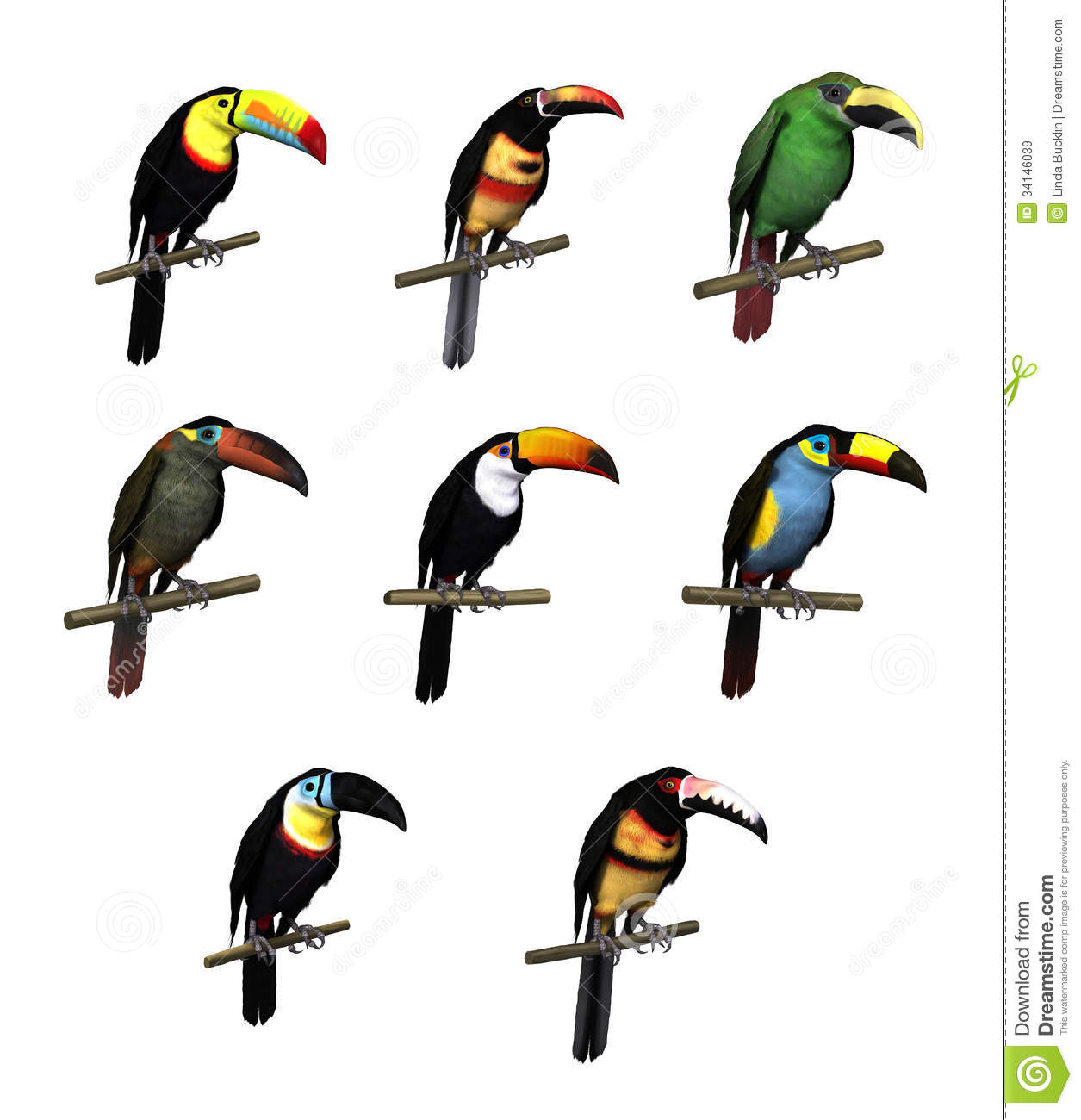 toucan varieties royalty free stock images image 34146039 toucan clipart for preschoolers toucan clipart panda