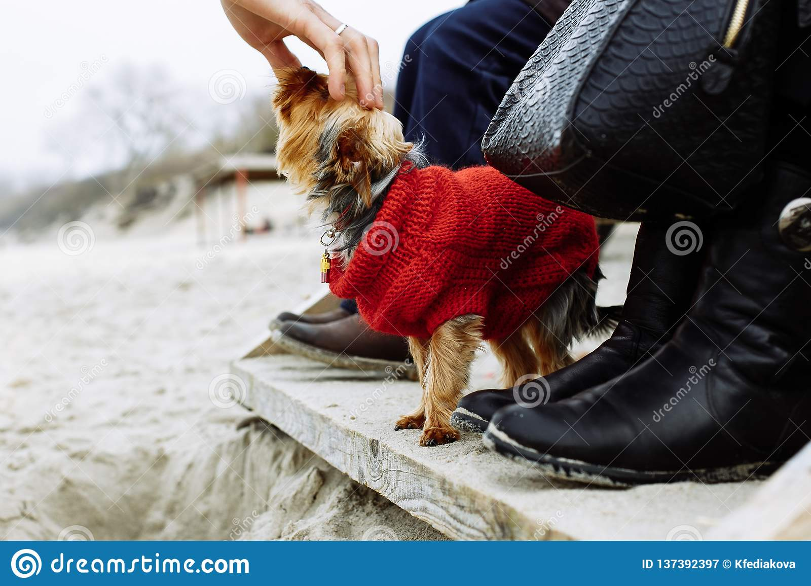 Touching dog at the beach