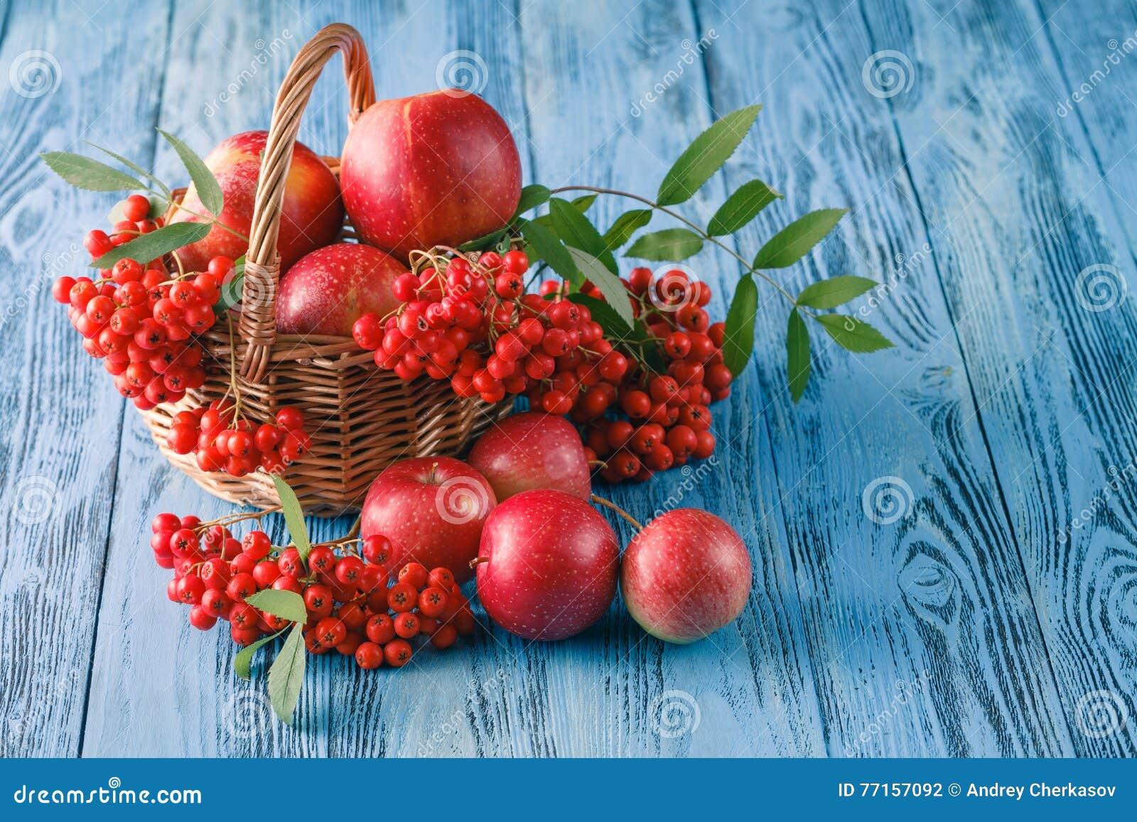 Toujours la vie automnale avec les pommes et la sorbe