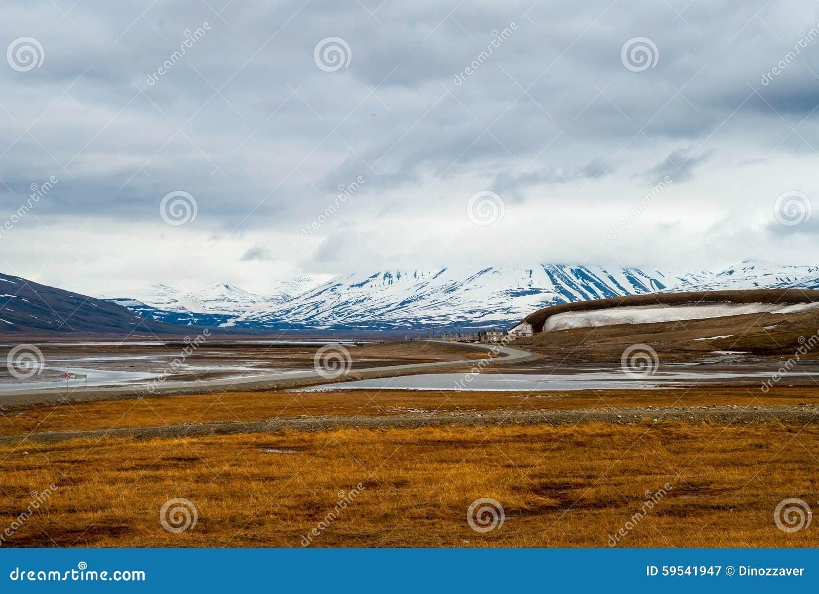 Toundra arctique en été, le Svalbard